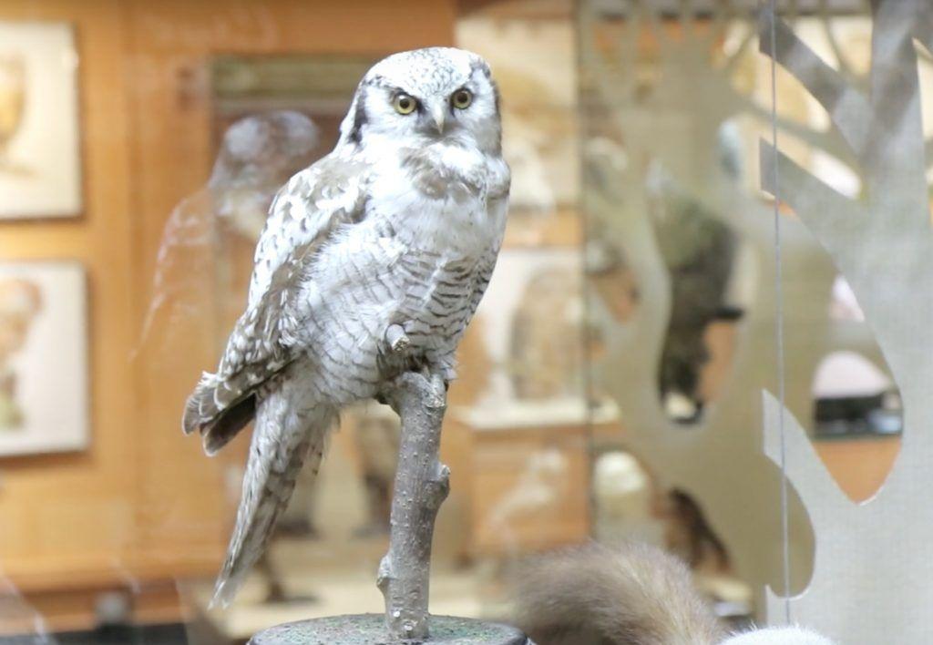Экскурсии и лекции: Дарвиновский музей работает в режиме онлайн. Фото: скриншот виртуальной экскурсии по выставке «СОВЫ»