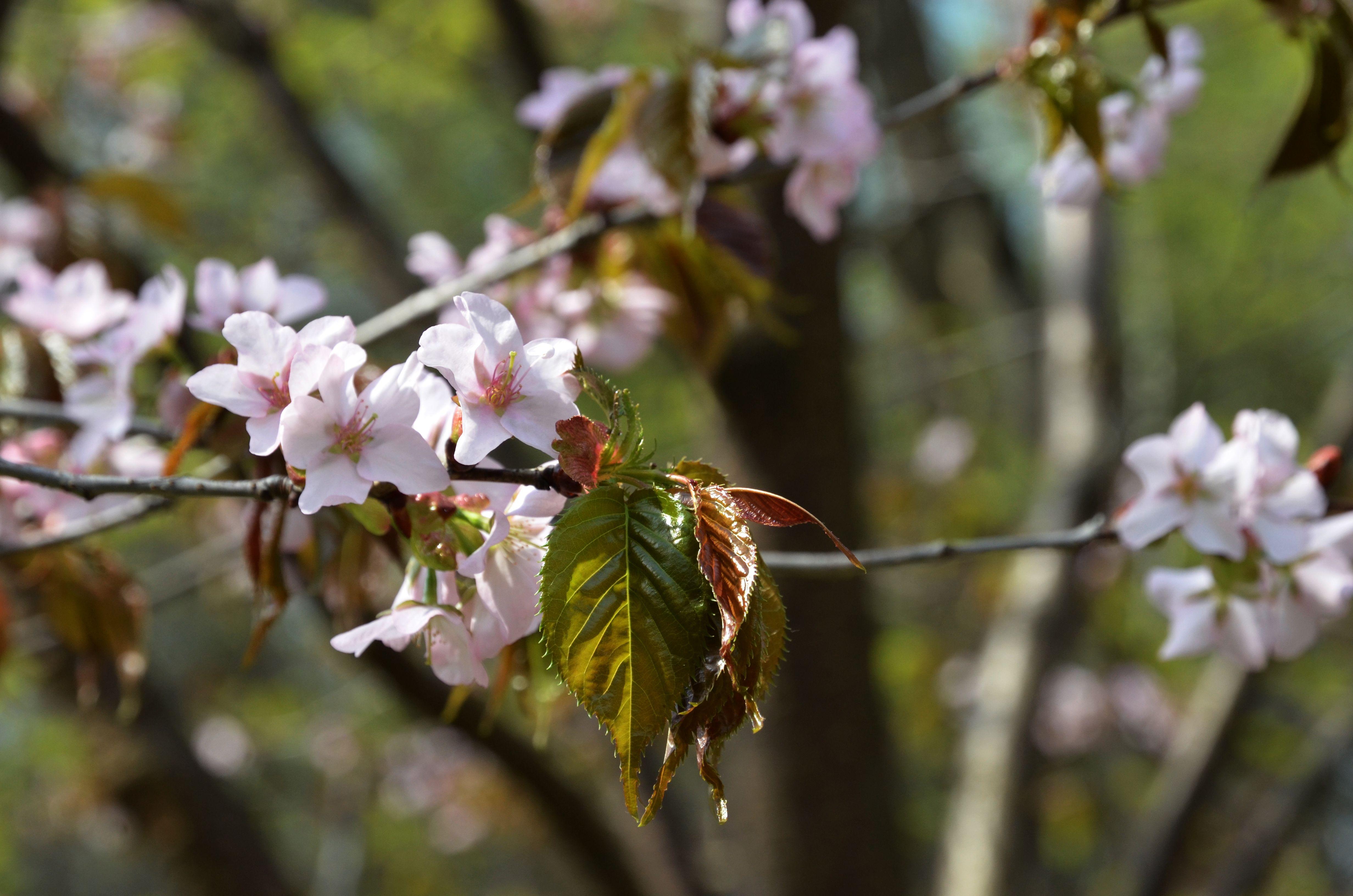 Природа столичных дендропарков и цветы из фоамирана: какие мероприятия подготовили для жителей юга в пятницу