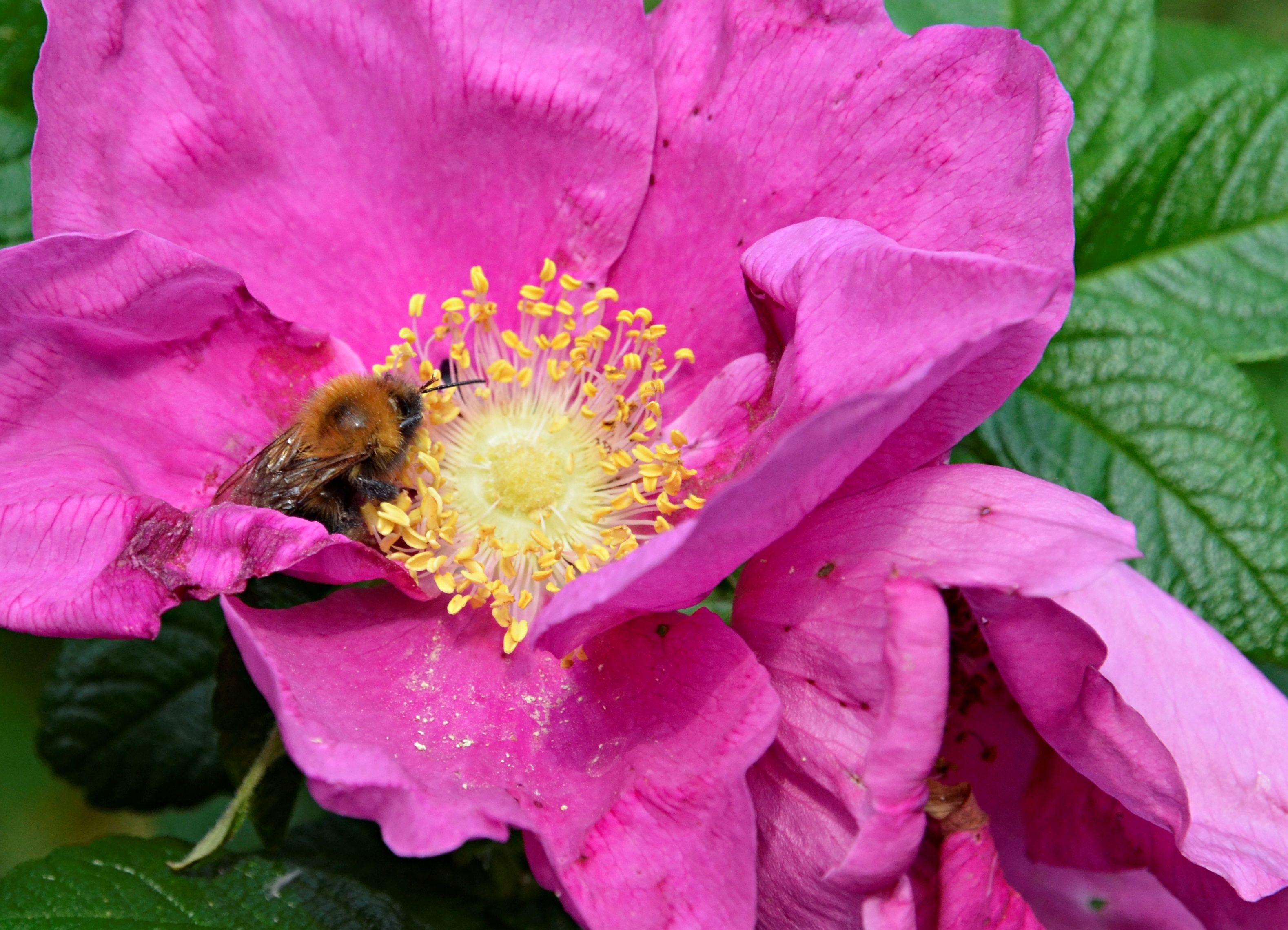 Столичные пчелы преждевременно вылетели из ульев