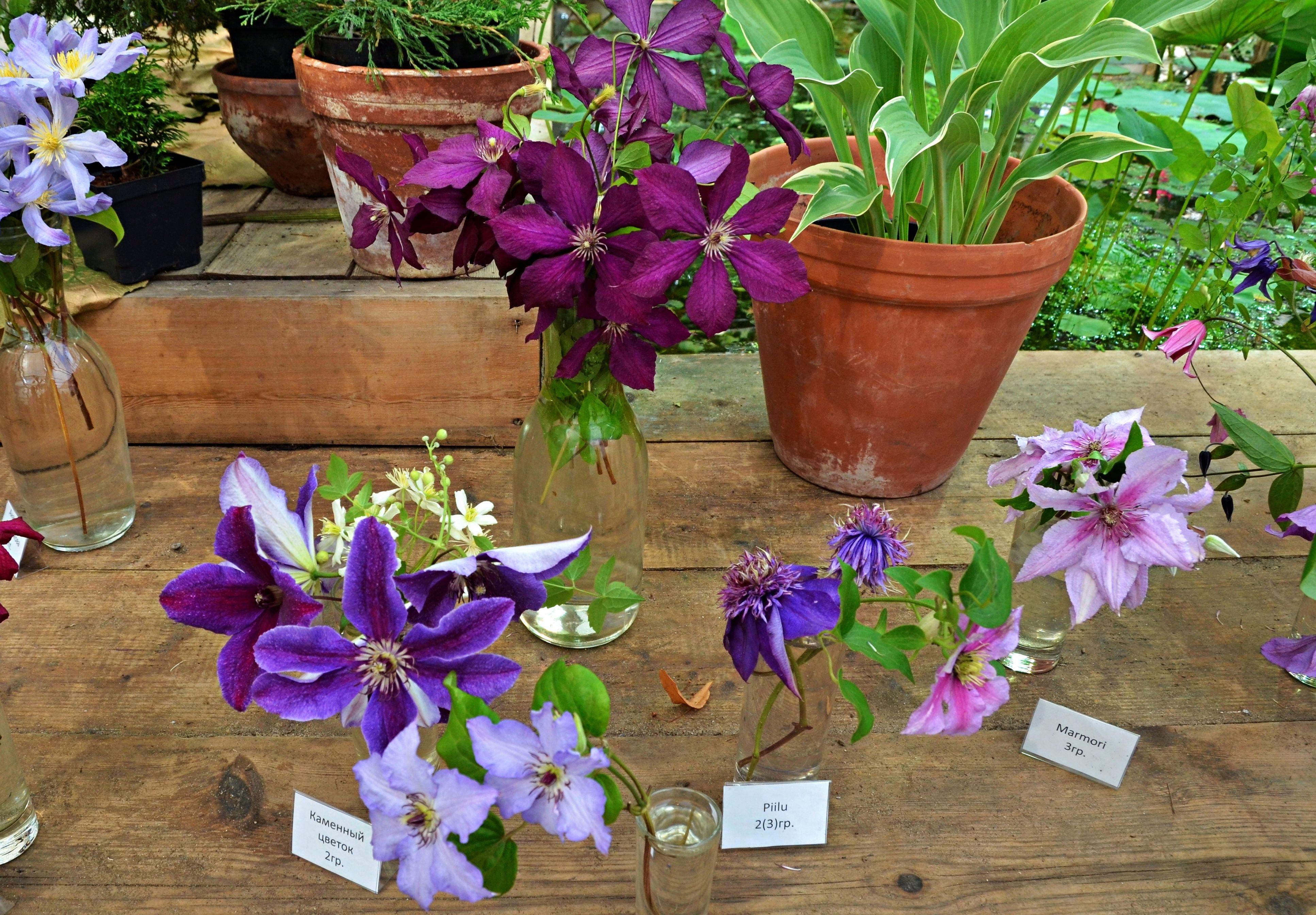 Правильно ухаживать за комнатными растениями научат в Даниловском районе