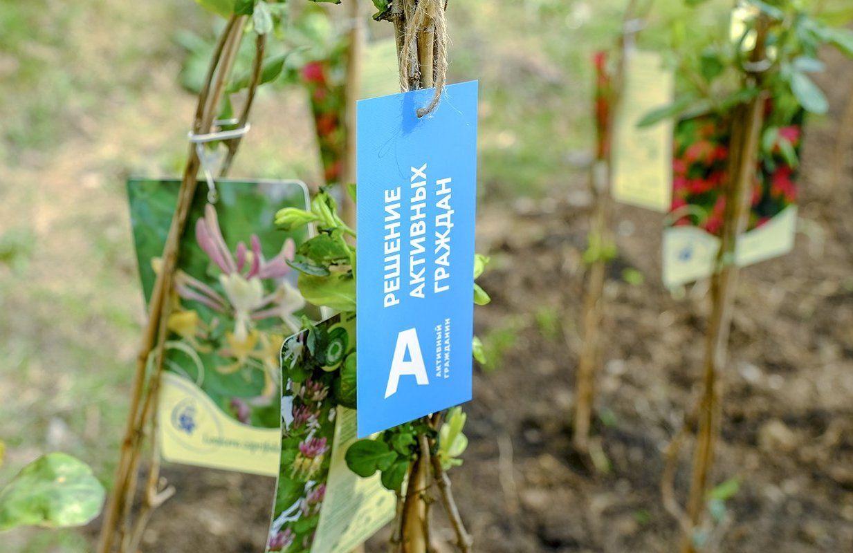 Более 850 тысяч растений появились в Москве по просьбам активных граждан