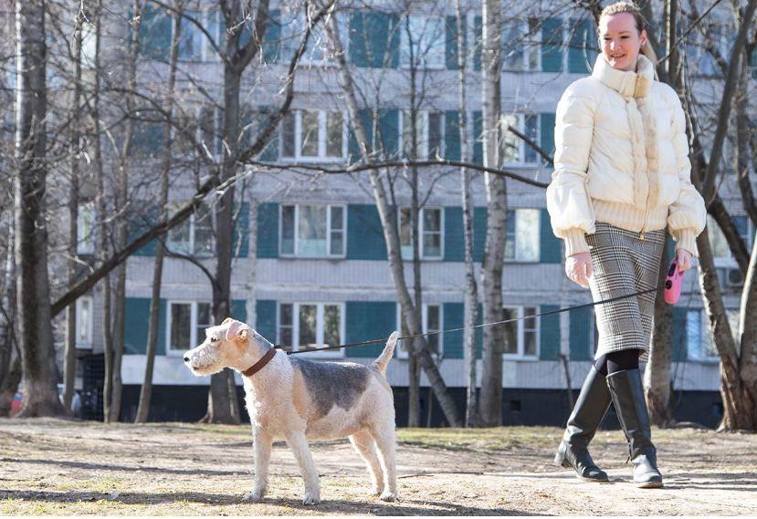 Волонтеры Москвы ежедневно выгуливают 120 собак московских пенсионеров