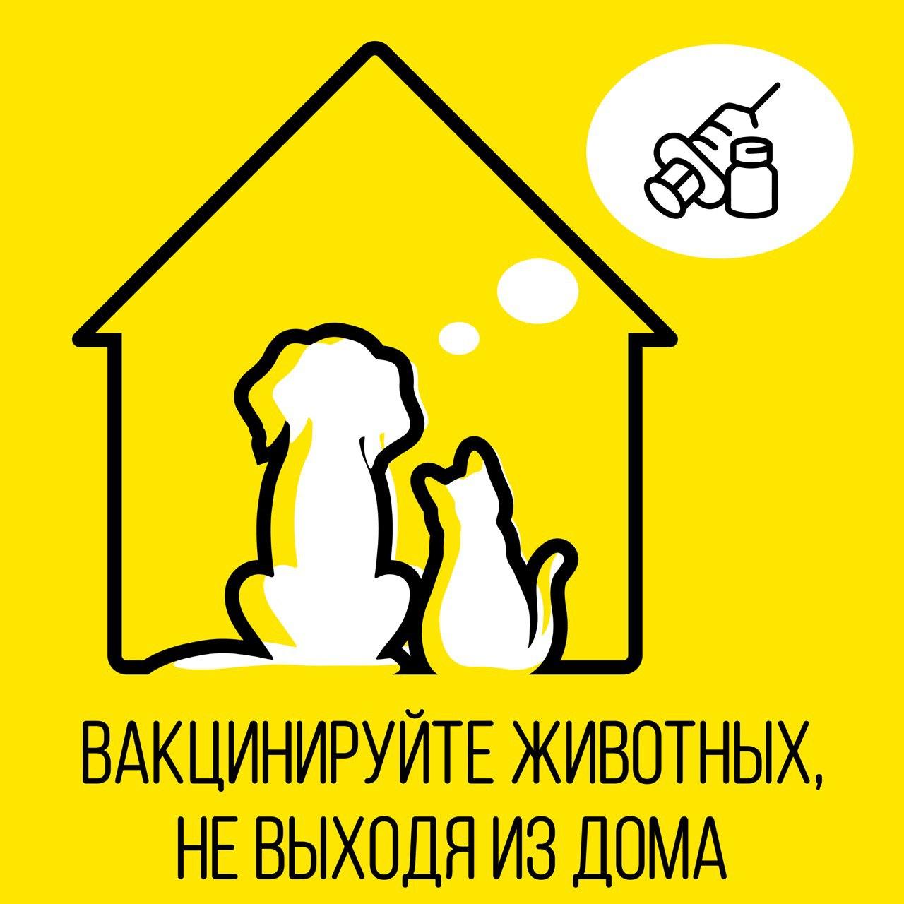 Вакцинировать питомца против бешенства на дому можно бесплатно