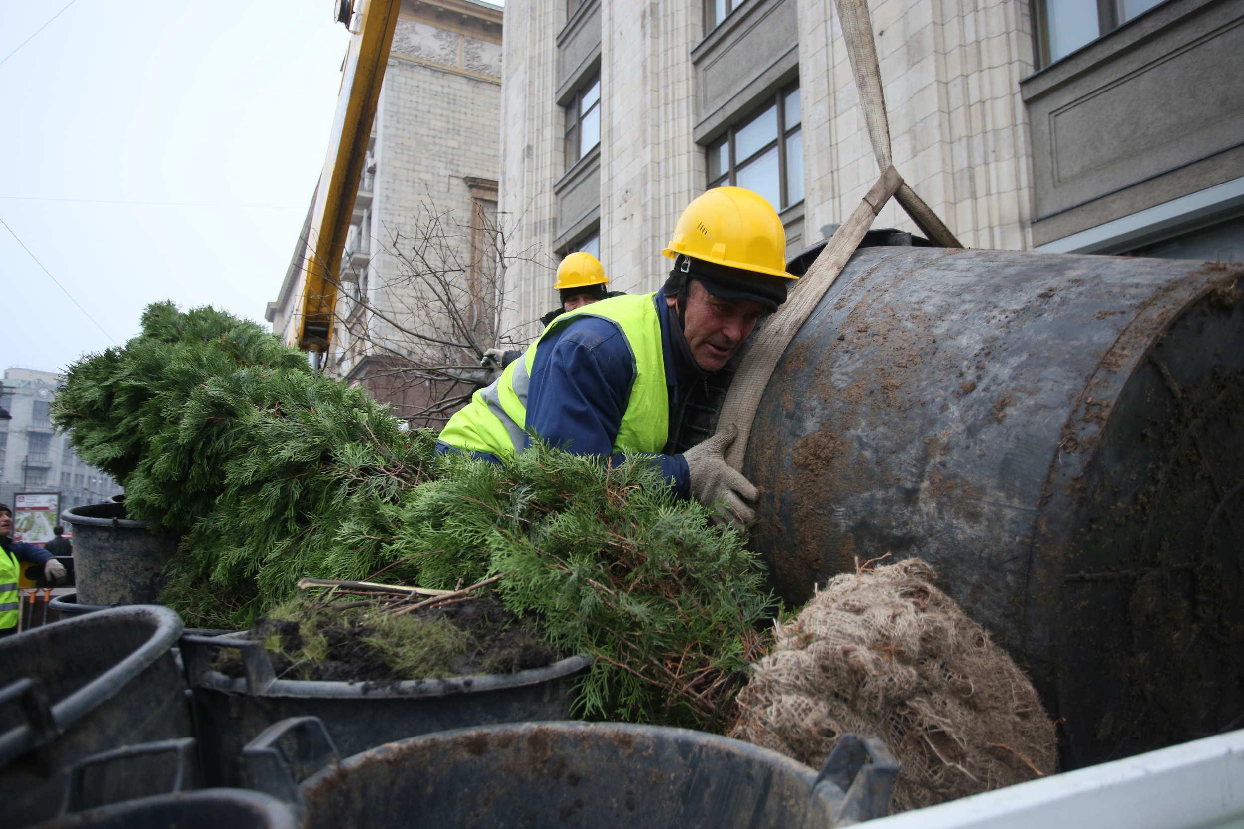 Москва высадила более 1,5 тысяч деревьев рядом с новостройками
