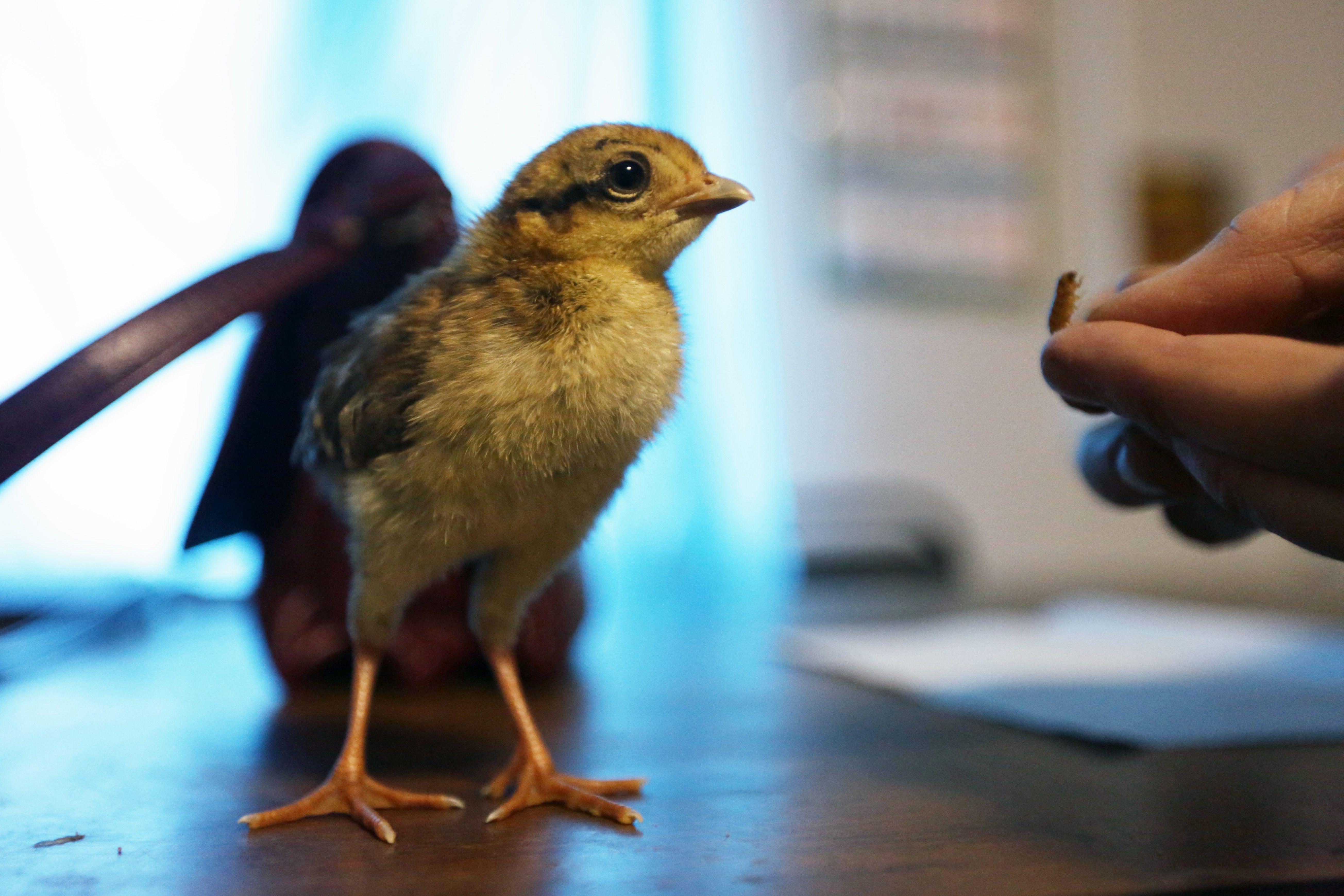Экологи объявили о начале брачного периода фазанов в Битцевском лесу