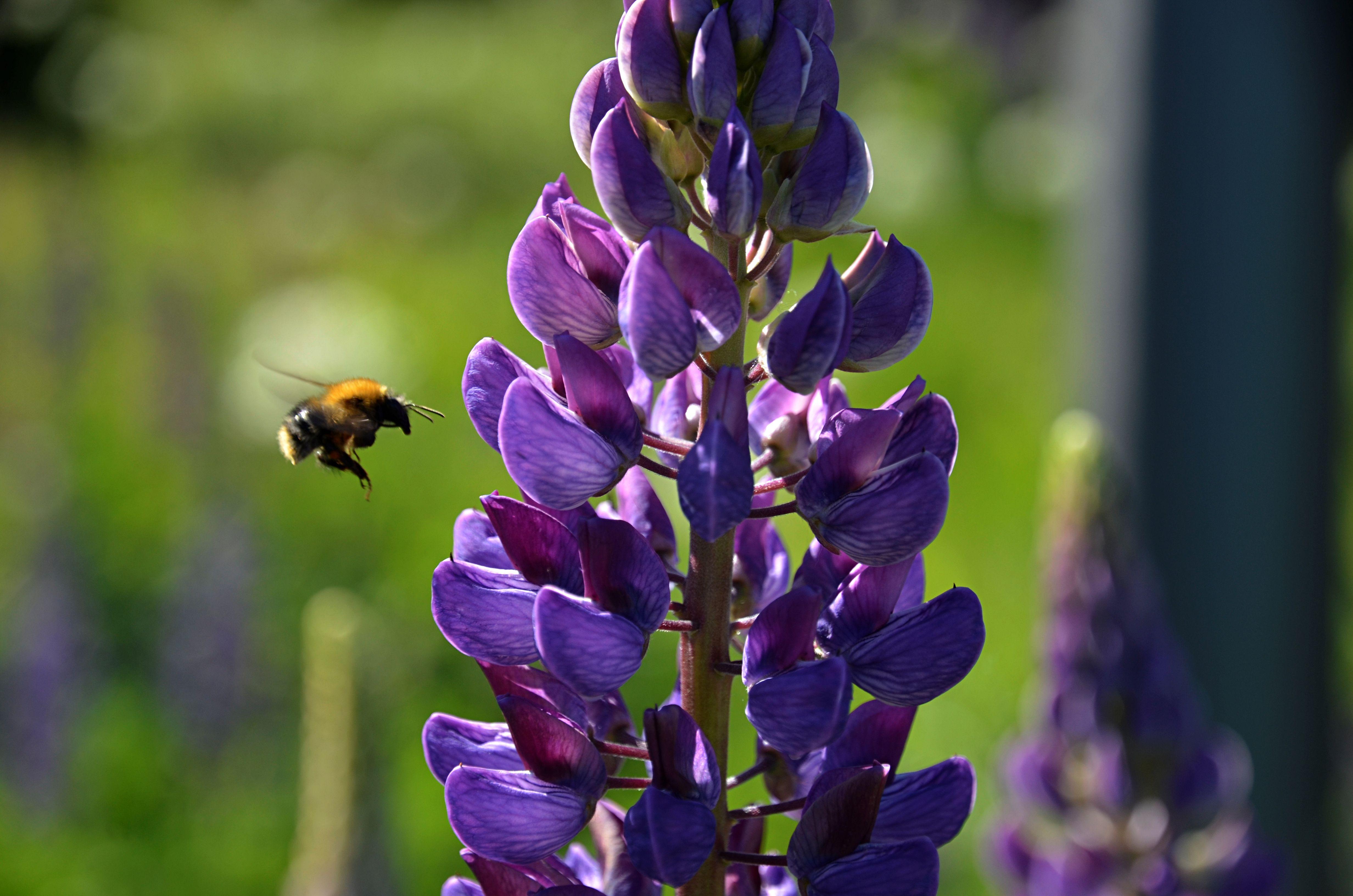 Более восьми видов насекомых проснулись в столице раньше времени