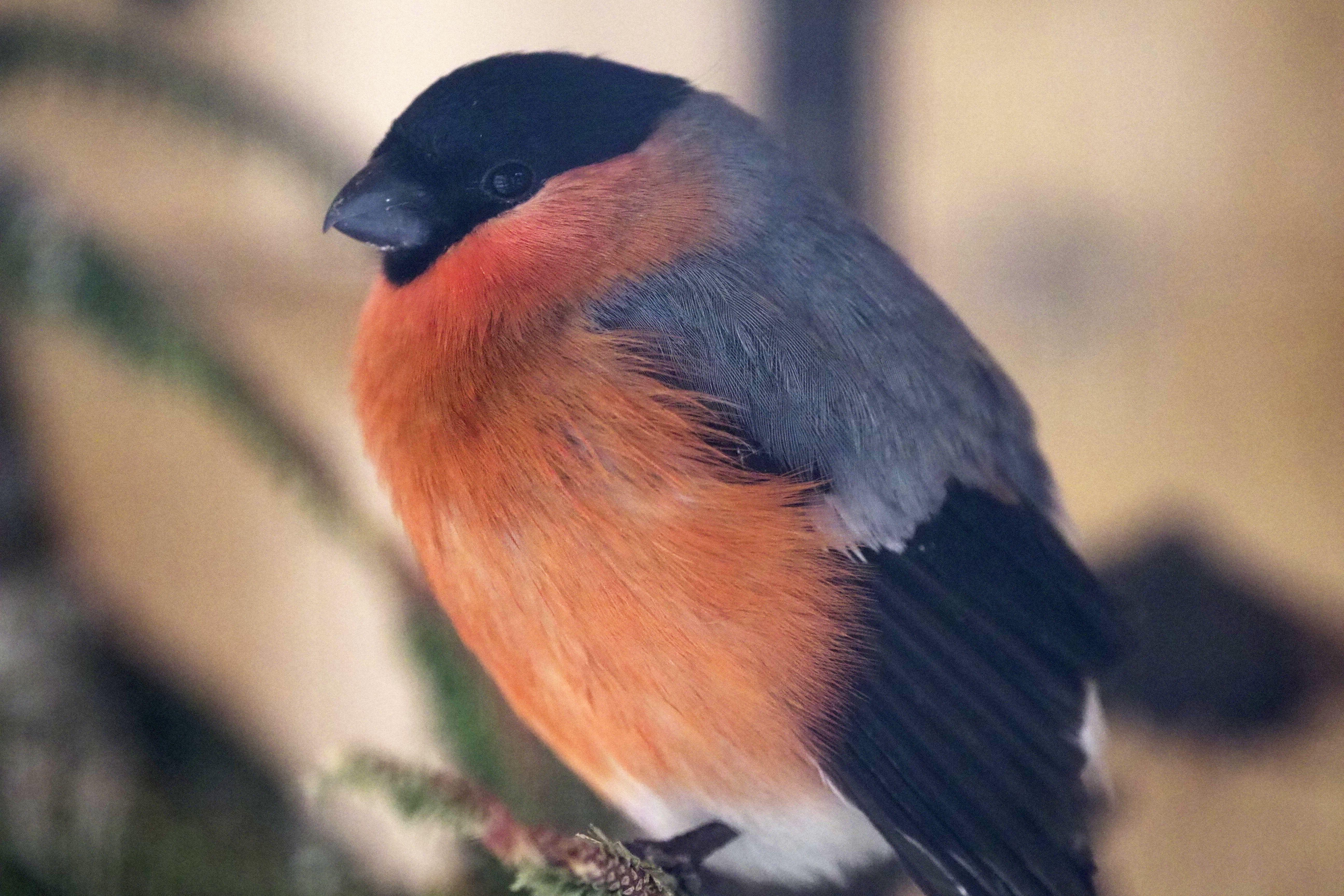 Гнездование с комфортом: самоизоляция москвичей порадует перелетных птиц