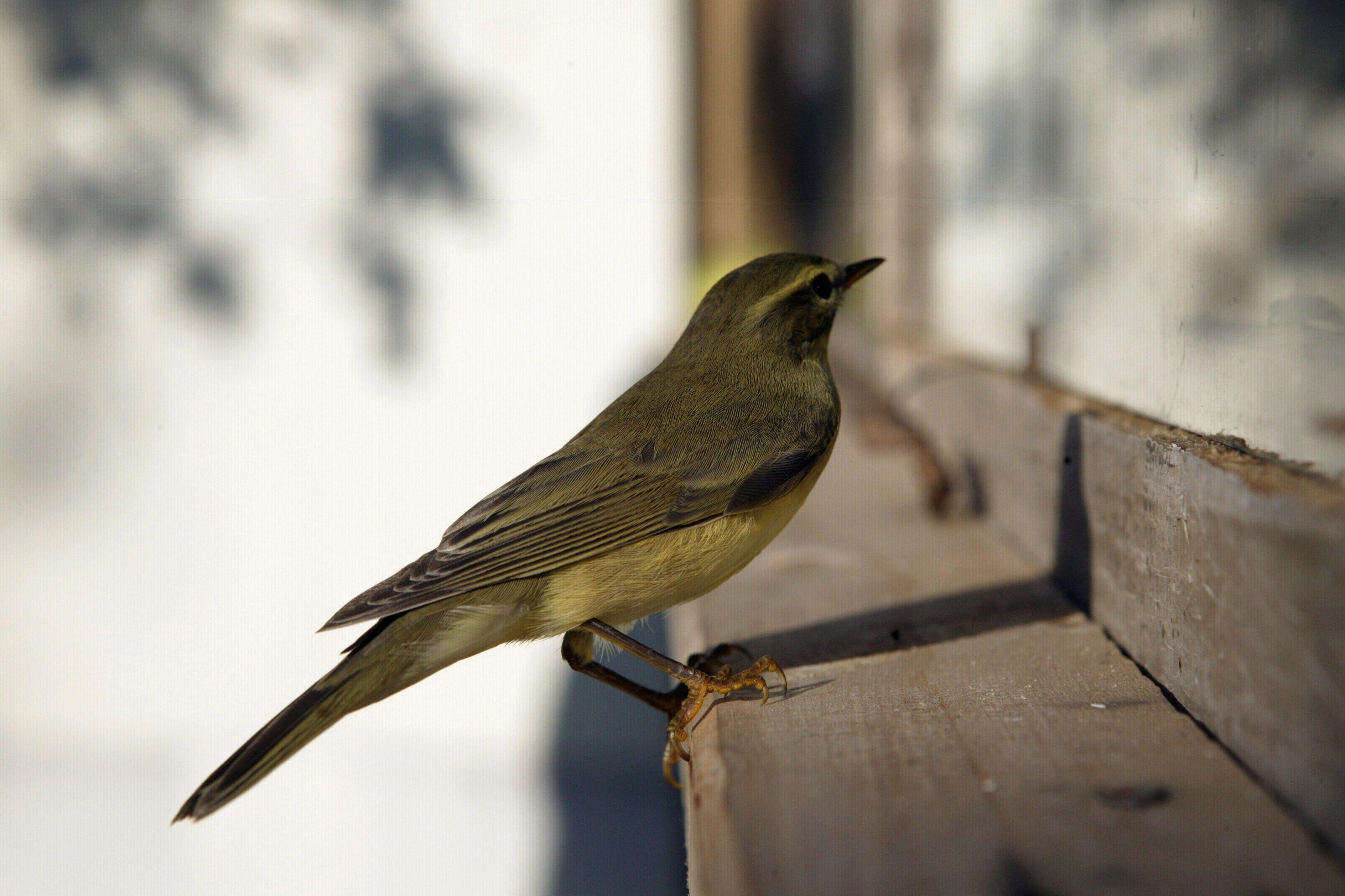 Хлебом не корми: в «Царицыне» составили меню для птиц