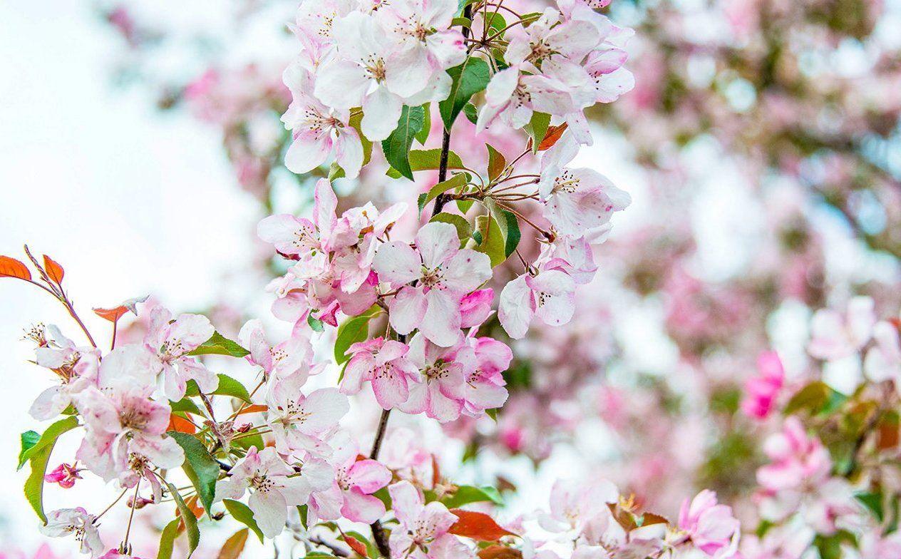 Зона отдыха «Фруктовый сад» появится в Бирюлеве Восточном