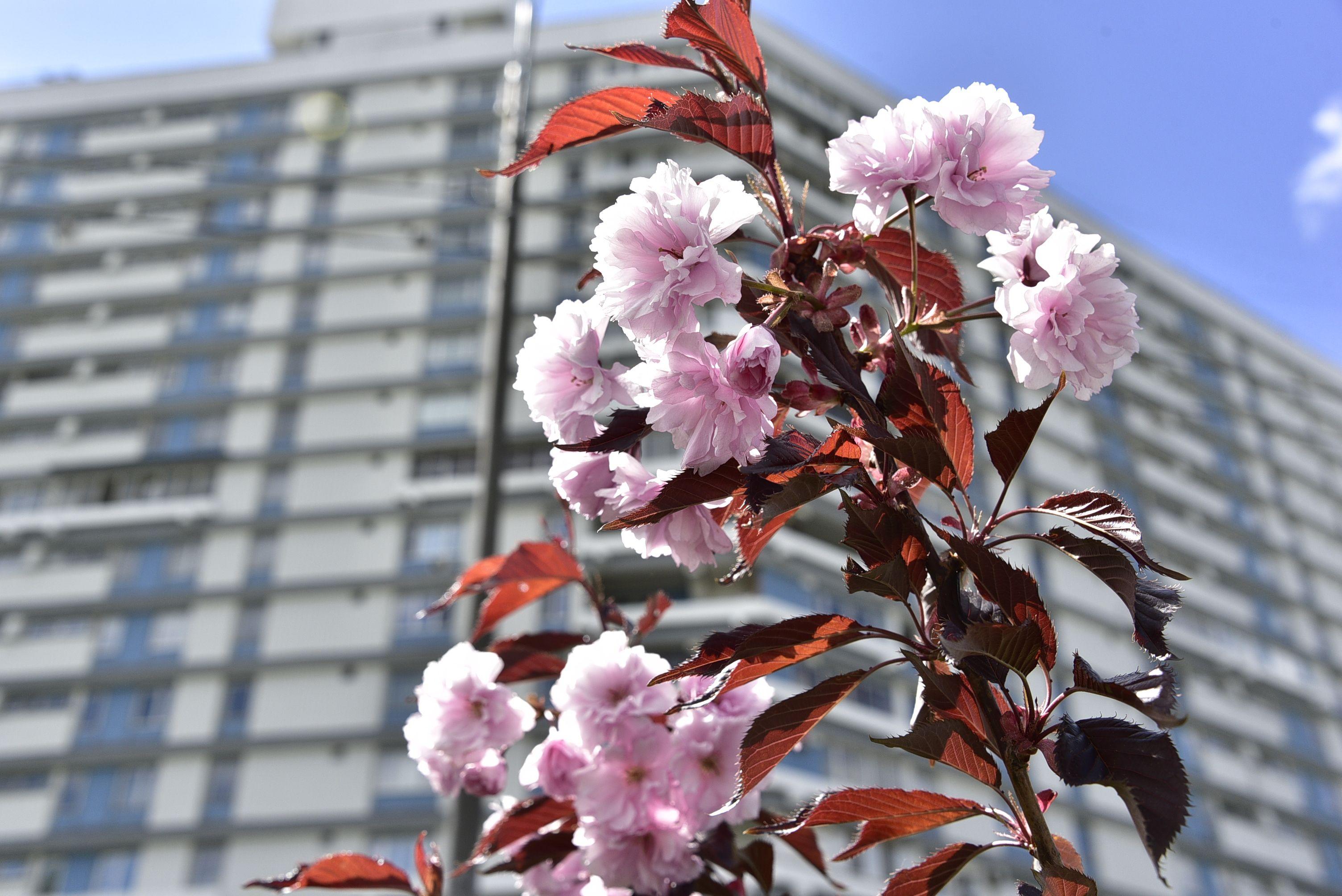 Фотофакт: Цветут сады