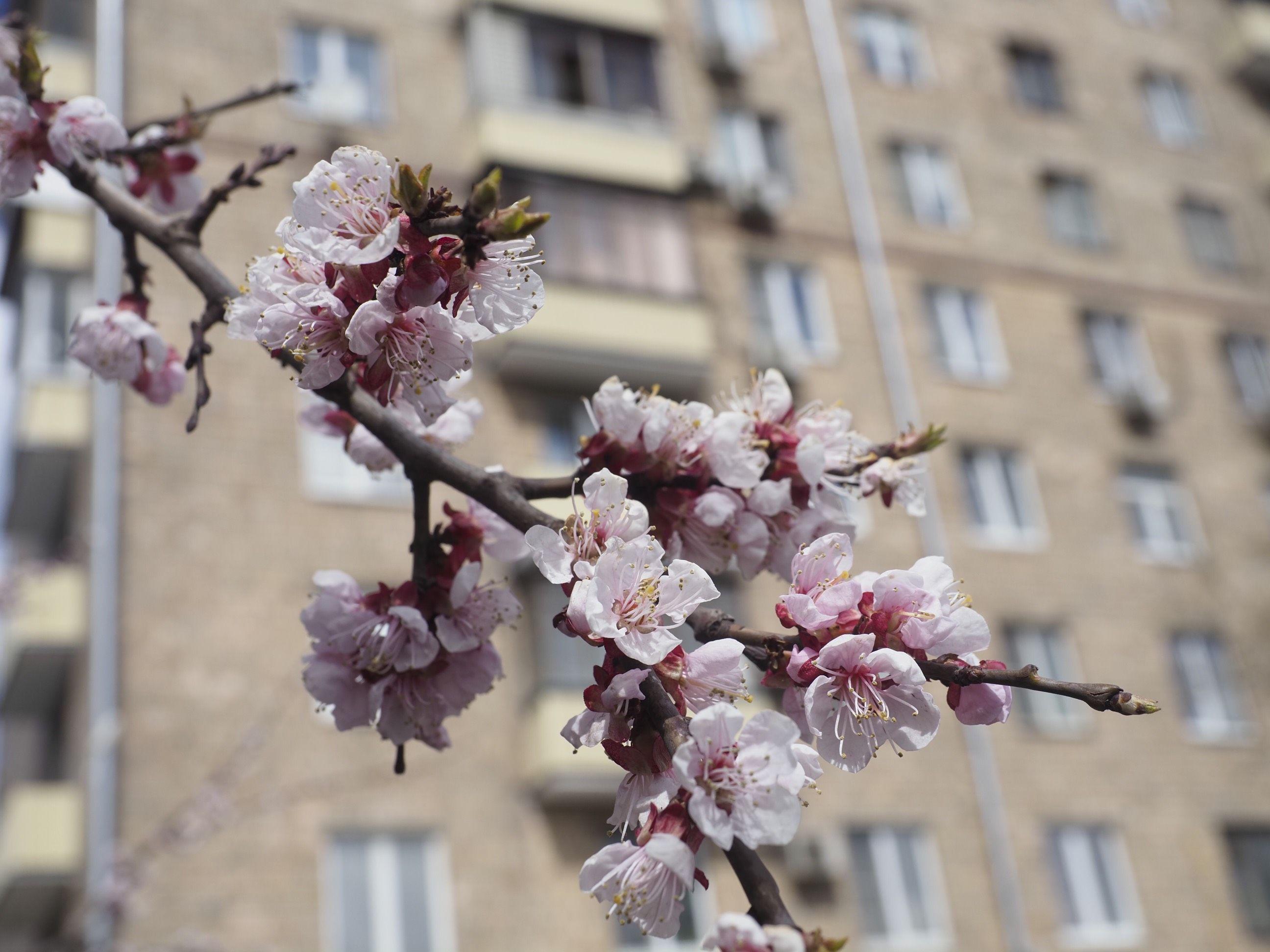Второго мая в Москве будет солнечно и тепло
