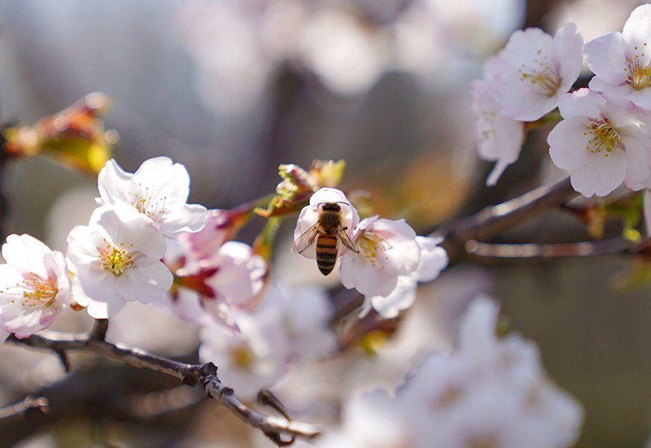 Самое сладкое хобби: цикл лекций о пчеловодстве запустят в Мосприроде