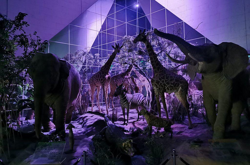 Семьи в мире животных и экскурсия с фонариками: онлайн-мероприятия подготовили в Дарвиновском музее. Фото предоставили в пресс-службе Дарвиновского музея