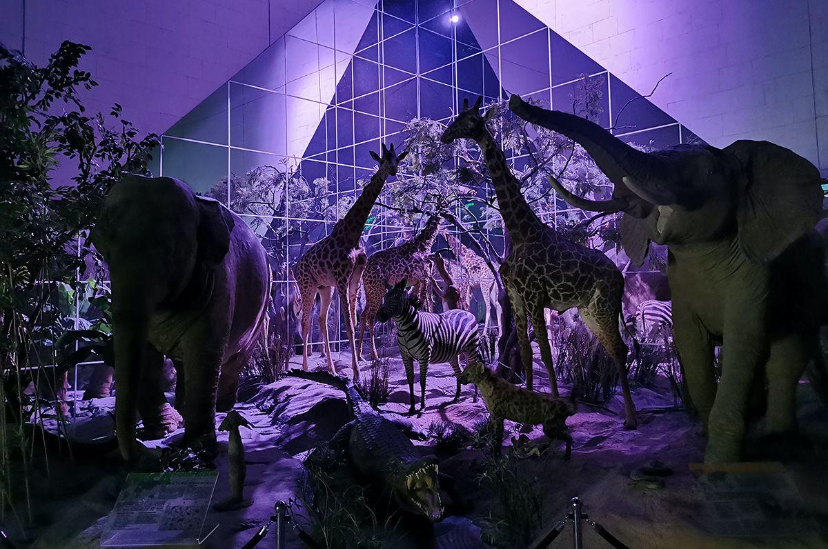 Семьи в мире животных и экскурсия с фонариками: новые онлайн-мероприятия подготовили в Дарвиновском музее