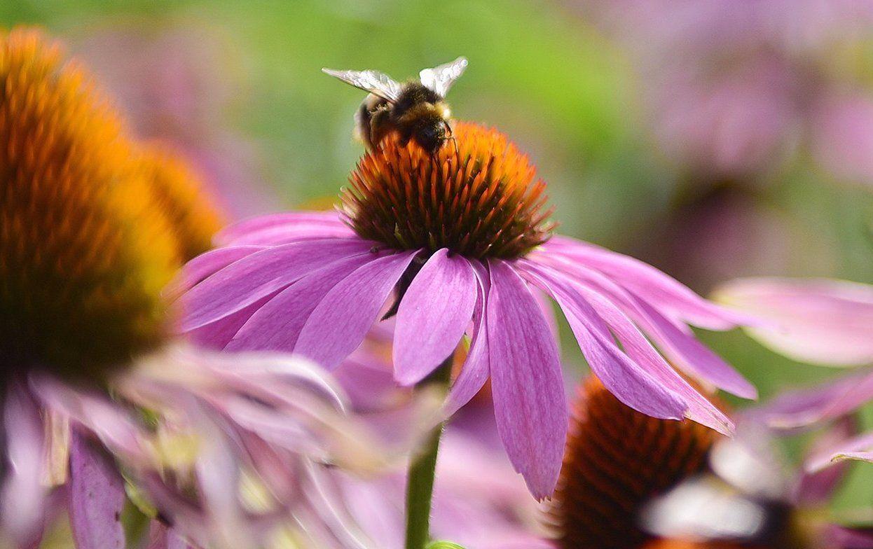 Викторины и мастер-классы подготовили в Мосприроде ко Всемирному дню пчел