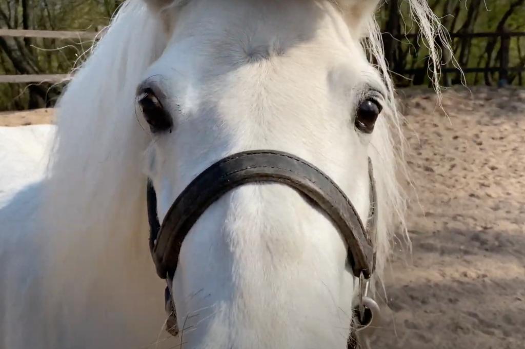 Коломенские пони и кони: горожан поближе познакомили с жителями музея-заповедника. Фото: скриншот видеоролика