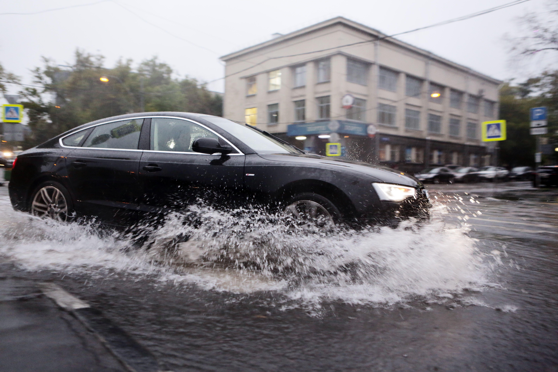 Московских водителей призвали парковаться вдали от деревьев из-за сильного ветра