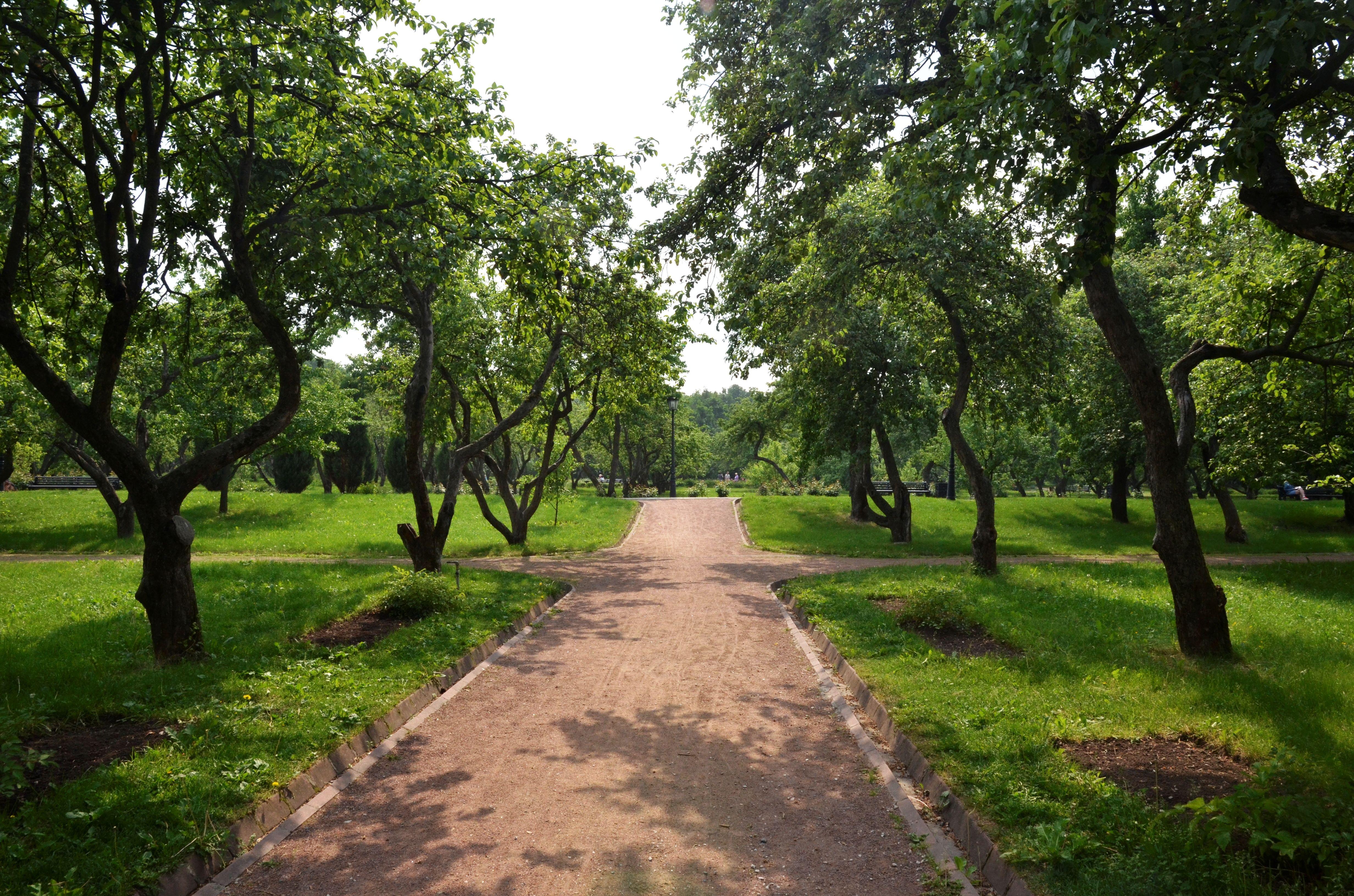 С 1 июня в Москве разрешат прогулки и спорт на свежем воздухе