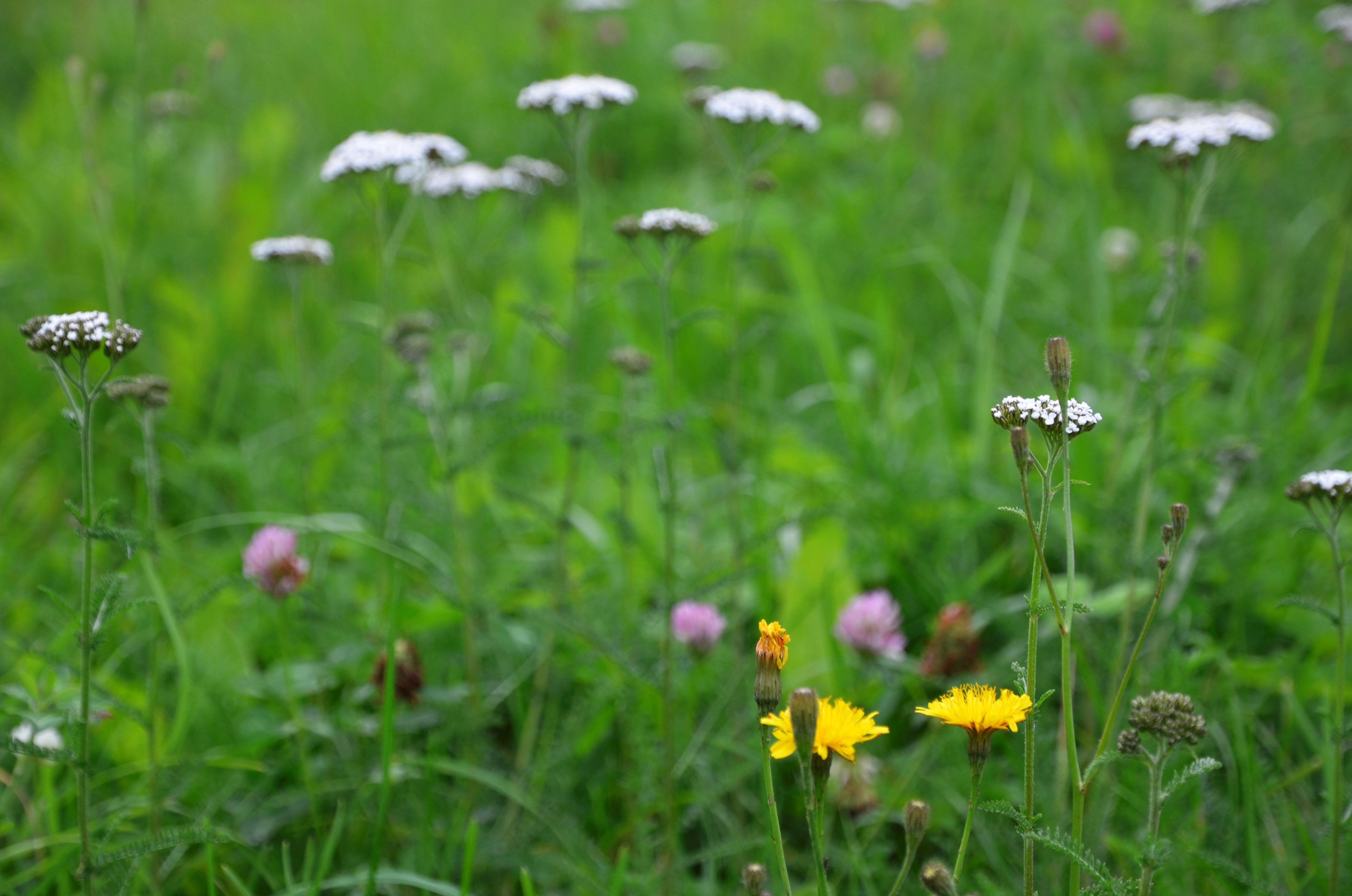 Бумажные стрекозы и ребусы про насекомых: онлайн-мероприятия подготовили в Мосприроде