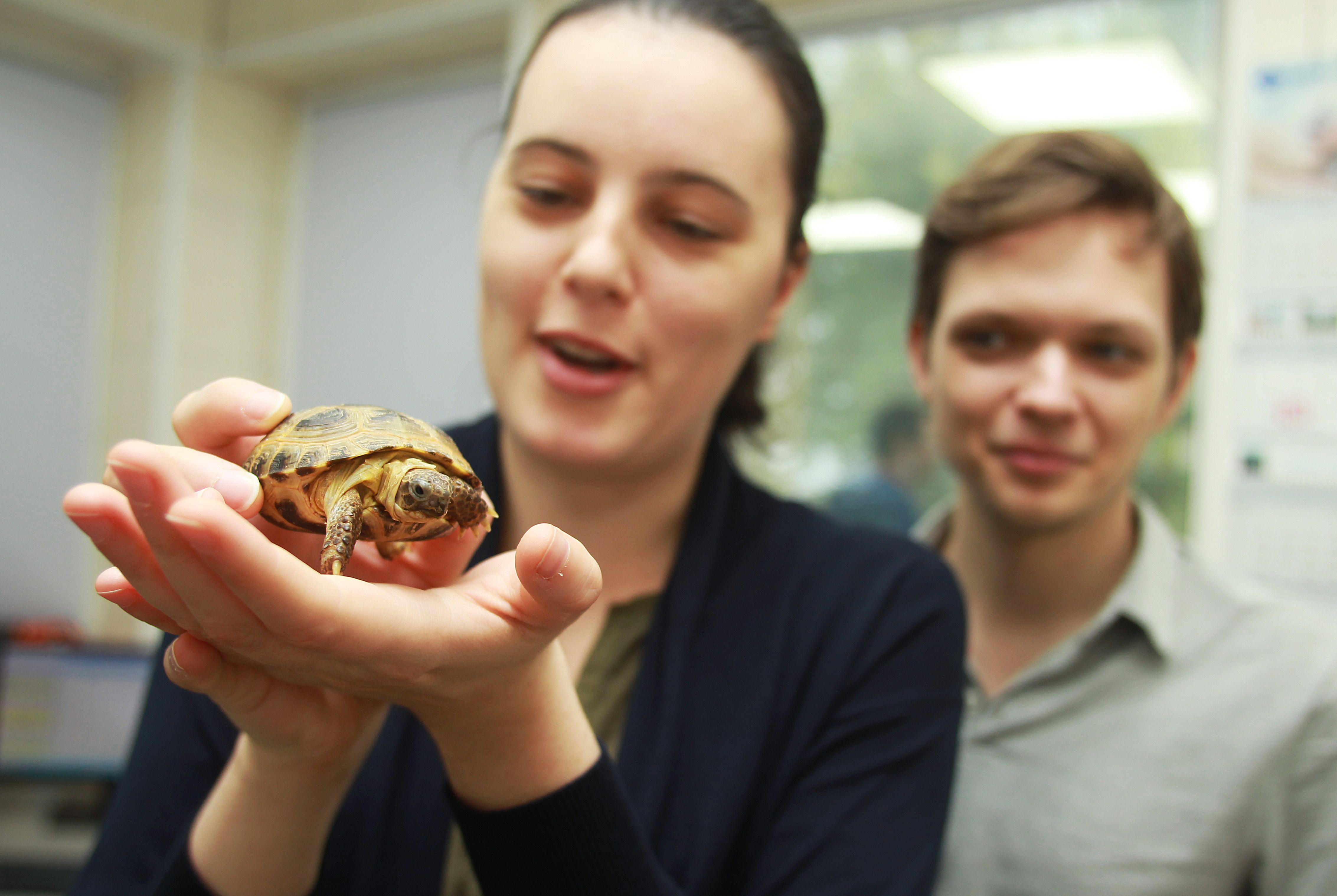 Москвичей призвали не выпускать домашних черепах в водоемы. Фото: Наталия Нечаева