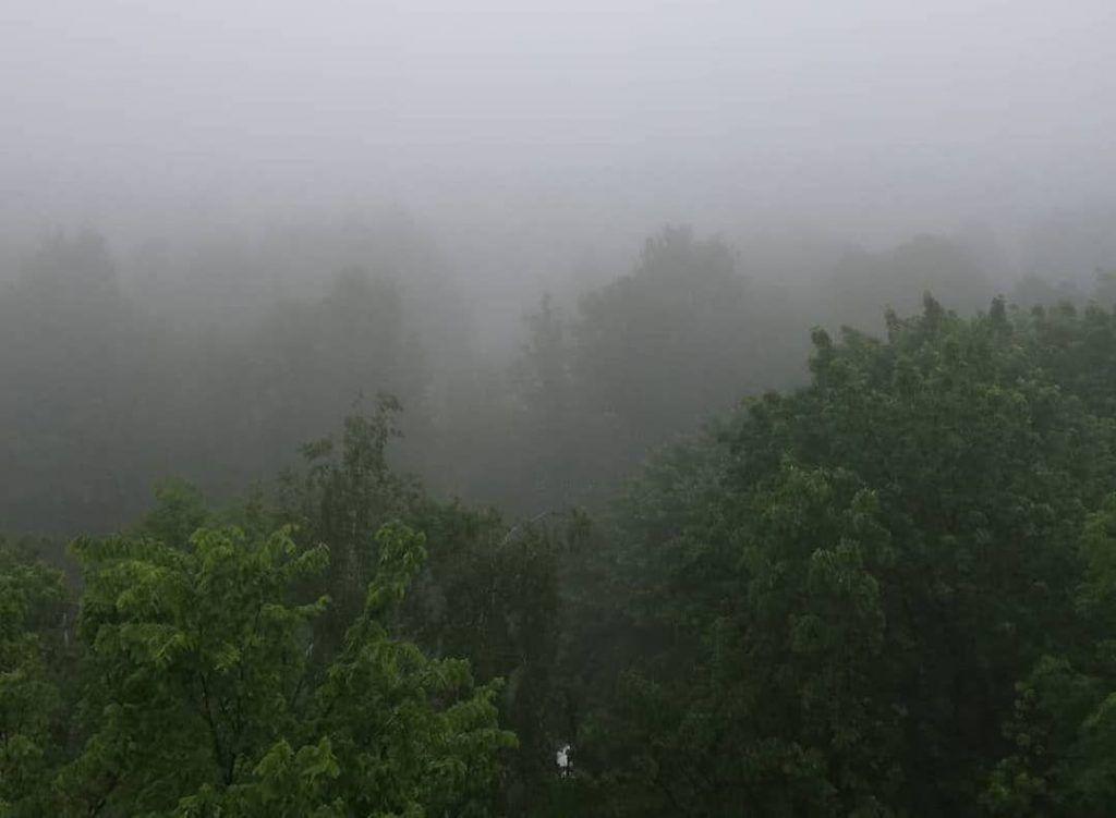 Туман и лисы: как началось лето в Орехове-Борисове Северном. Фото: пользователь @kalininalexander68 в Instagram