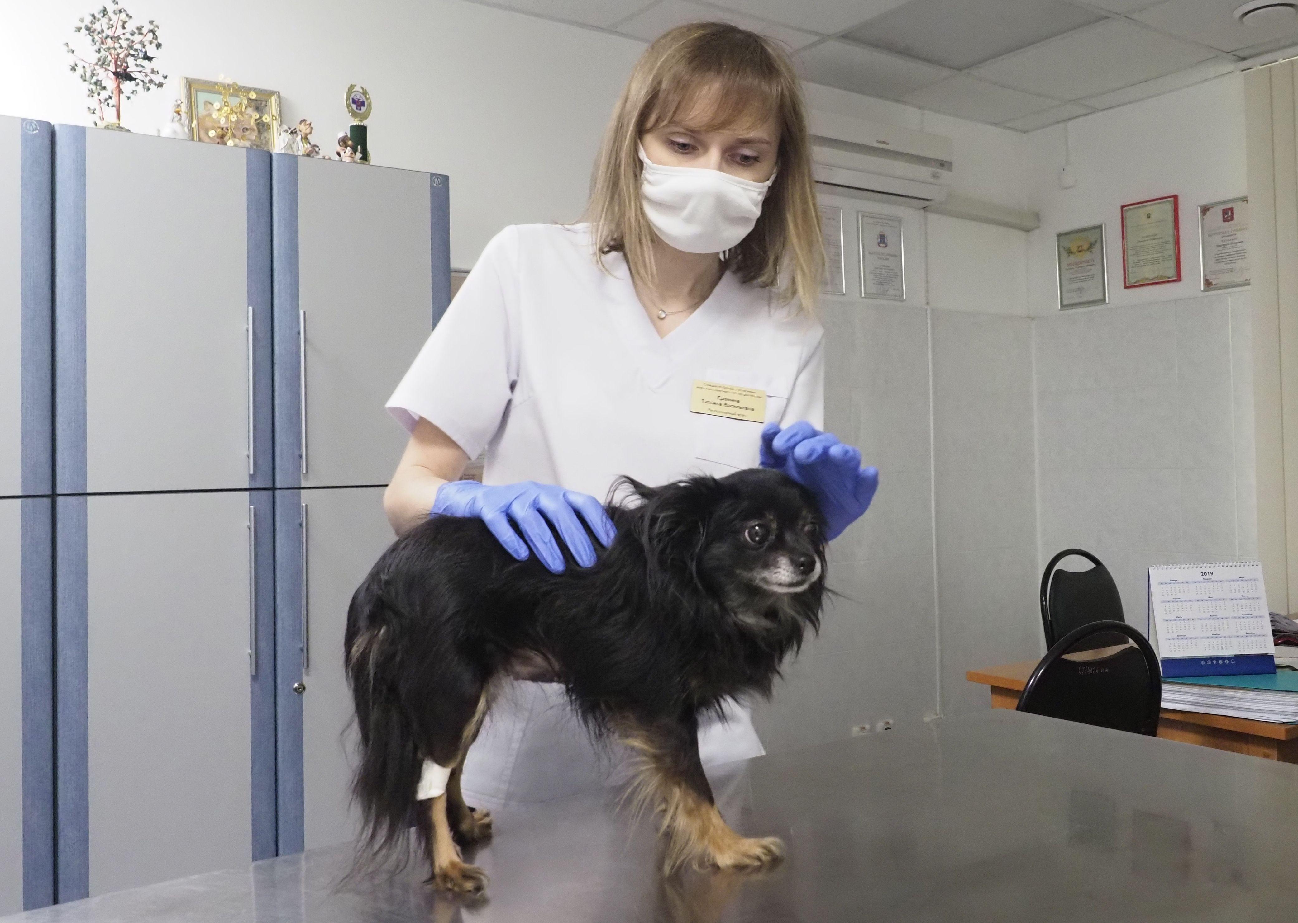 Москвичам посоветовали соблюдать технику безопасности при контакте с животными