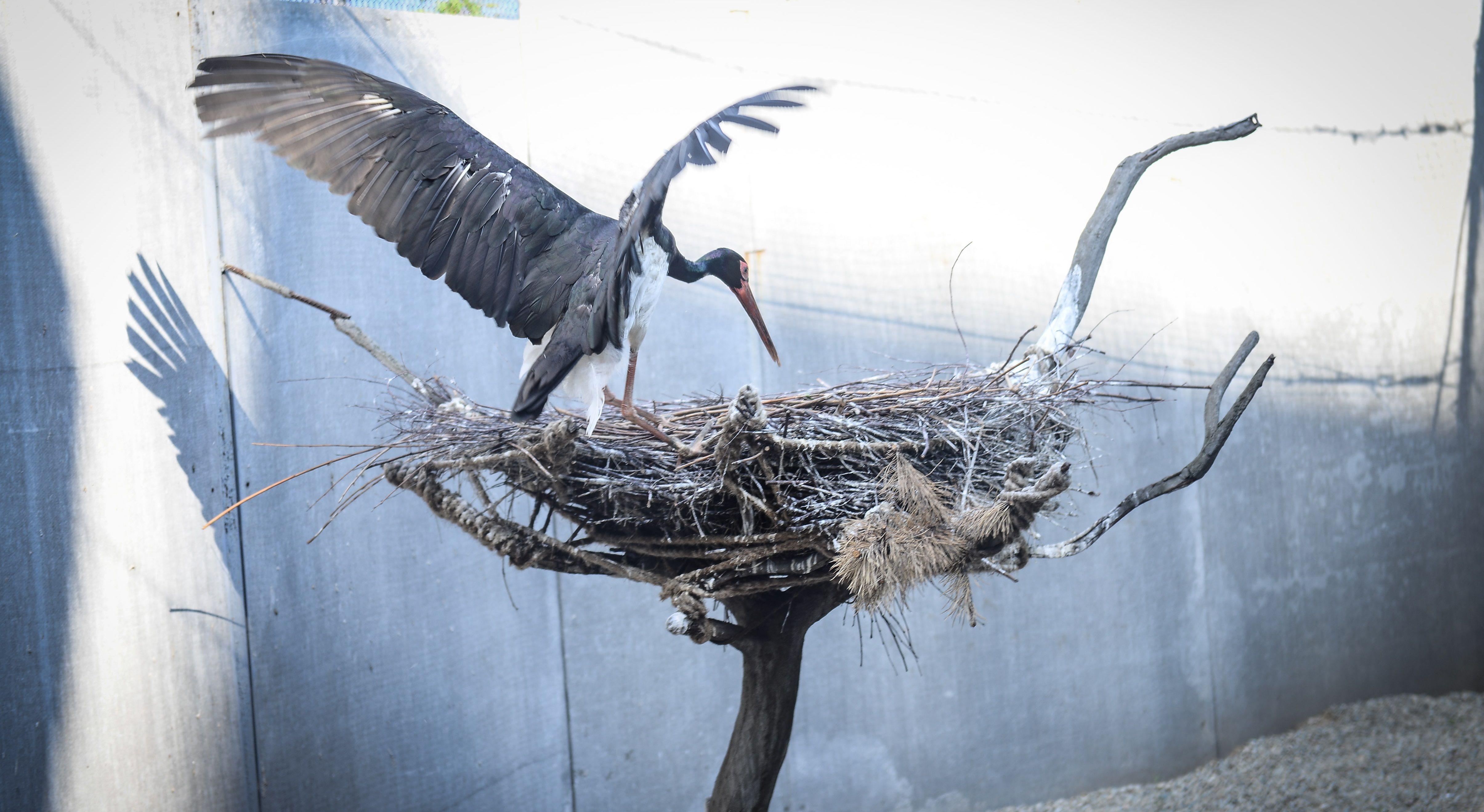 Черные аисты обзавелись потомством в зоопарке Москвы