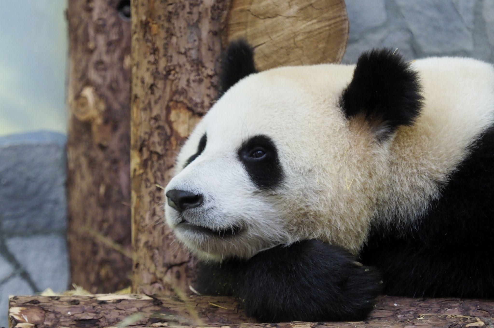 Московский зоопарк примет около двух тысяч посетителей в первый день работы