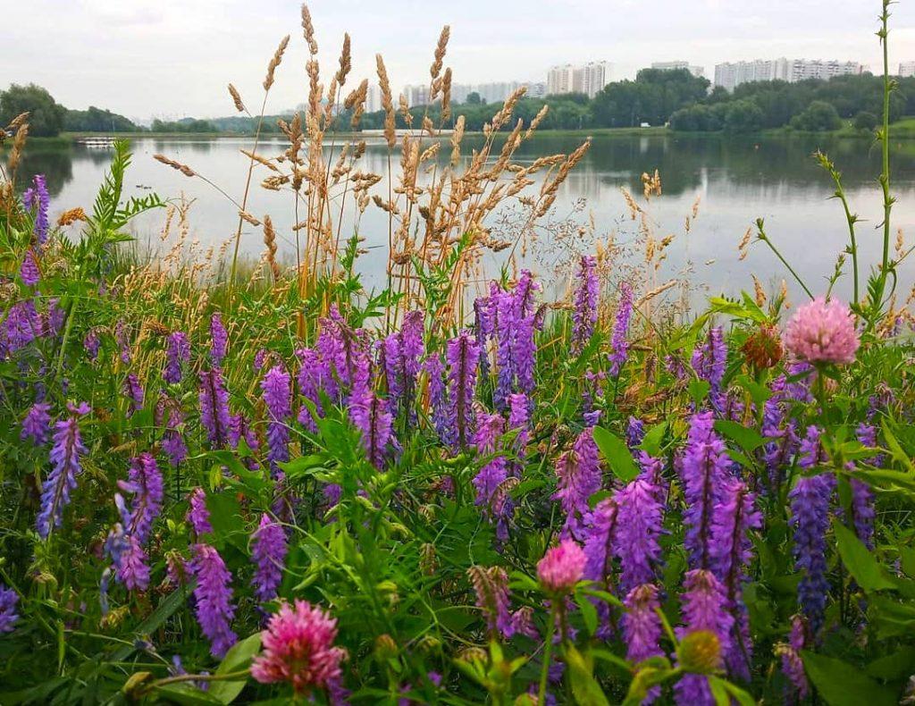Чудесная природа юга: разнообразие флоры запечатлела народный корреспондент. Фото: пользователь @morozzova_svetlana в Instagram