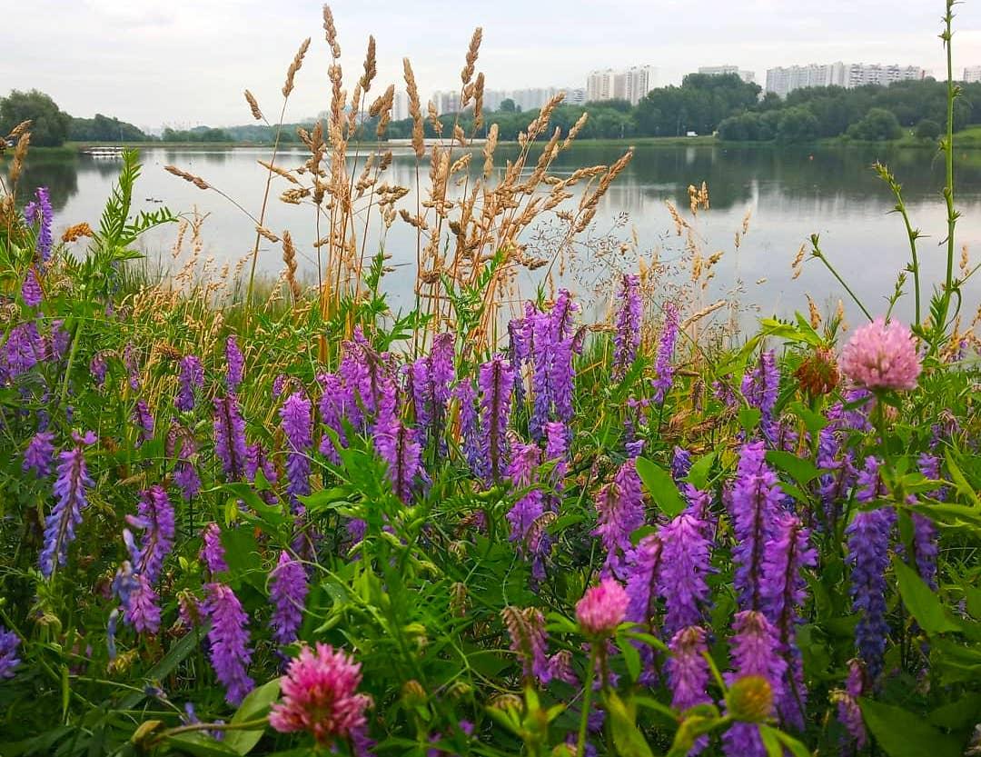 Чудесная природа юга: разнообразие флоры запечатлела народный корреспондент