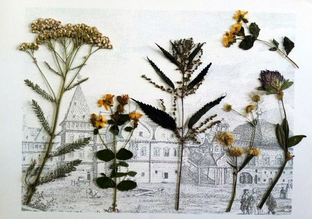 Цветочный гербарий «На память о Коломенском» предложили собрать москвичам
