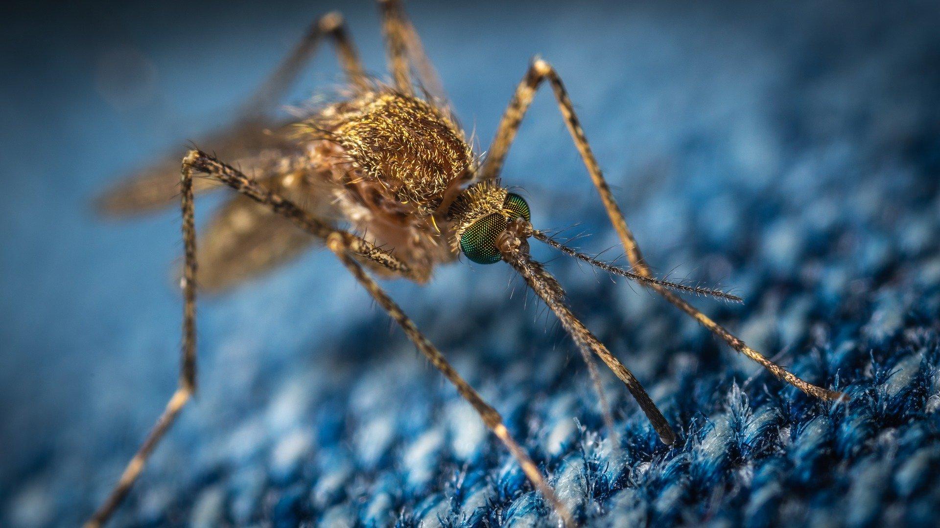 Москвичей напугали осложнениями после расчесывания комариных укусов