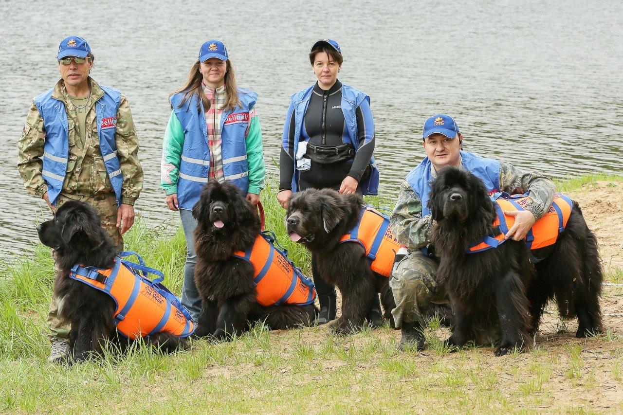 Как собаки помогают спасать людей на водоемах столицы