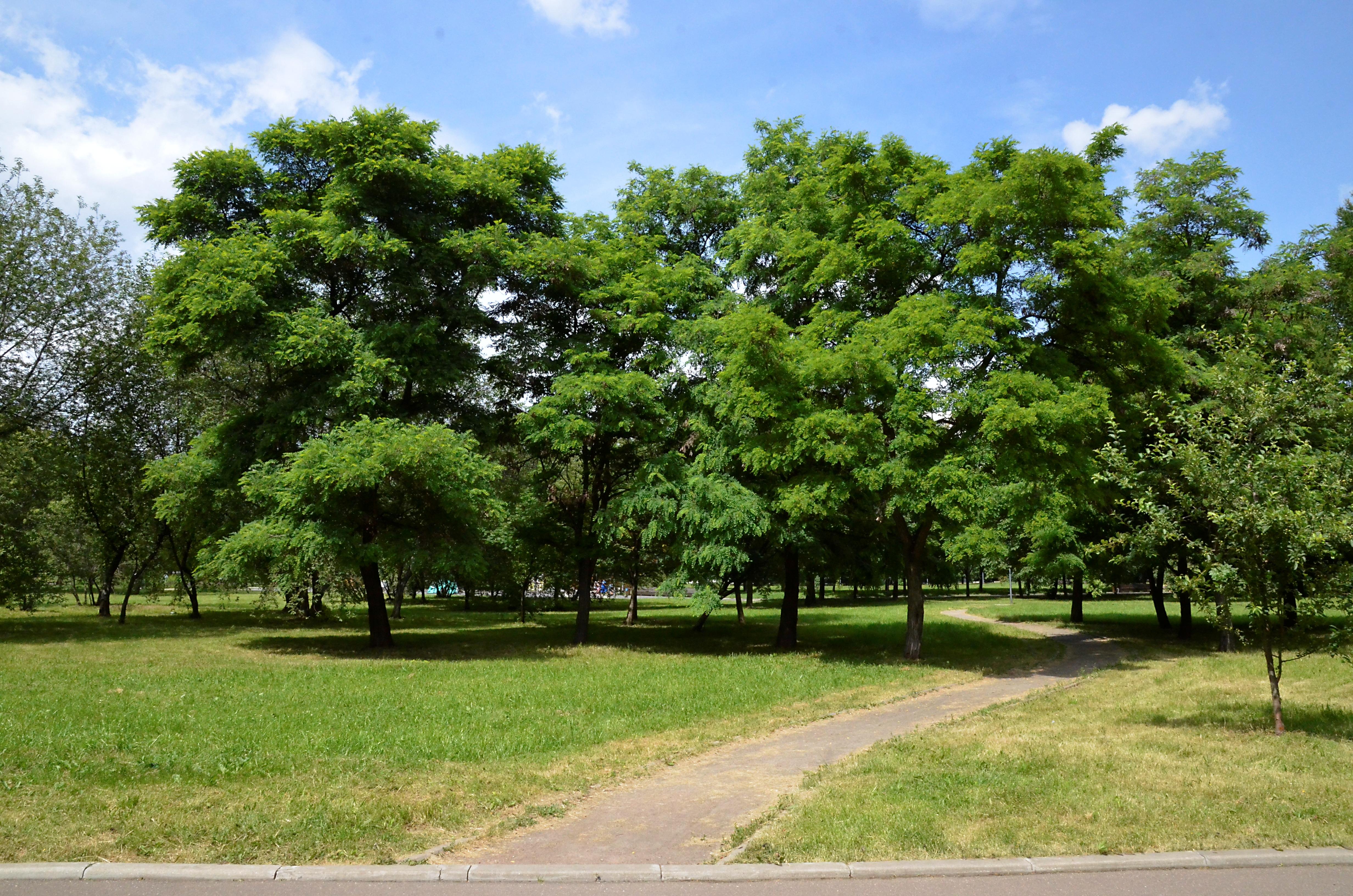 Депутат Мосгордумы: Виновные в порче 1,5 тысячи деревьев в ТиНАО должны понести наказание