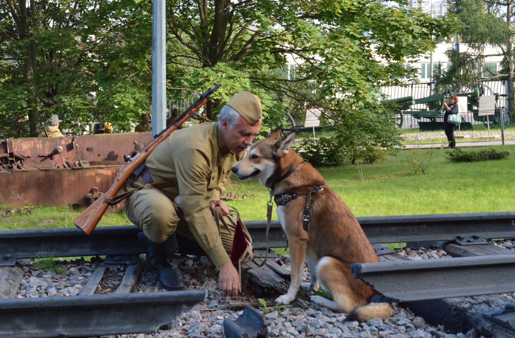 Волонтеры библиотеки №152 приняли участие в организации мероприятий ко Дню фронтовой собаки