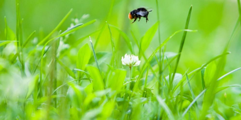 Любителей природы пригласили в экоцентр «Скворечник»