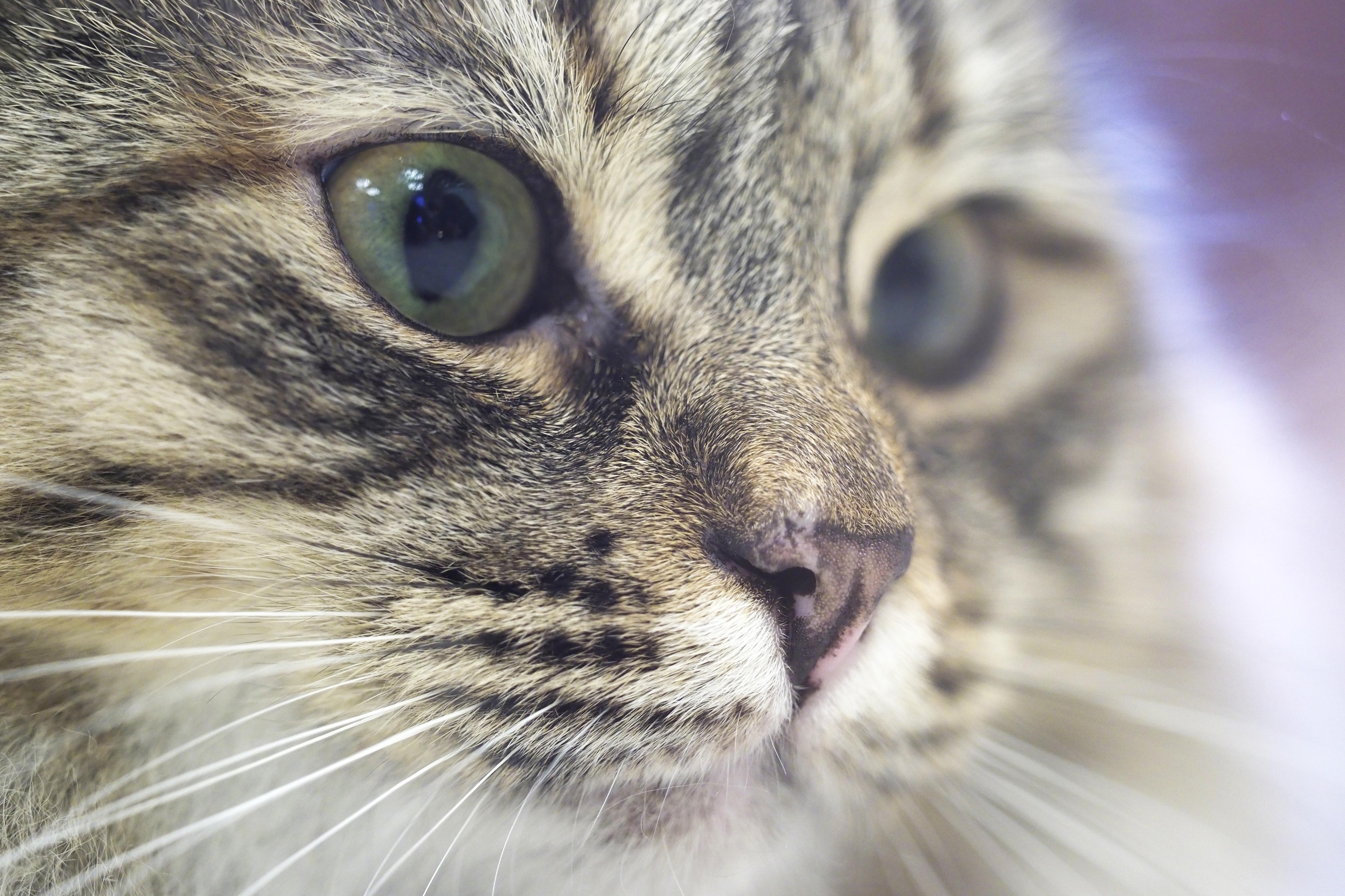 Ветеринары в Москве приняли 47 тысяч кошек за год