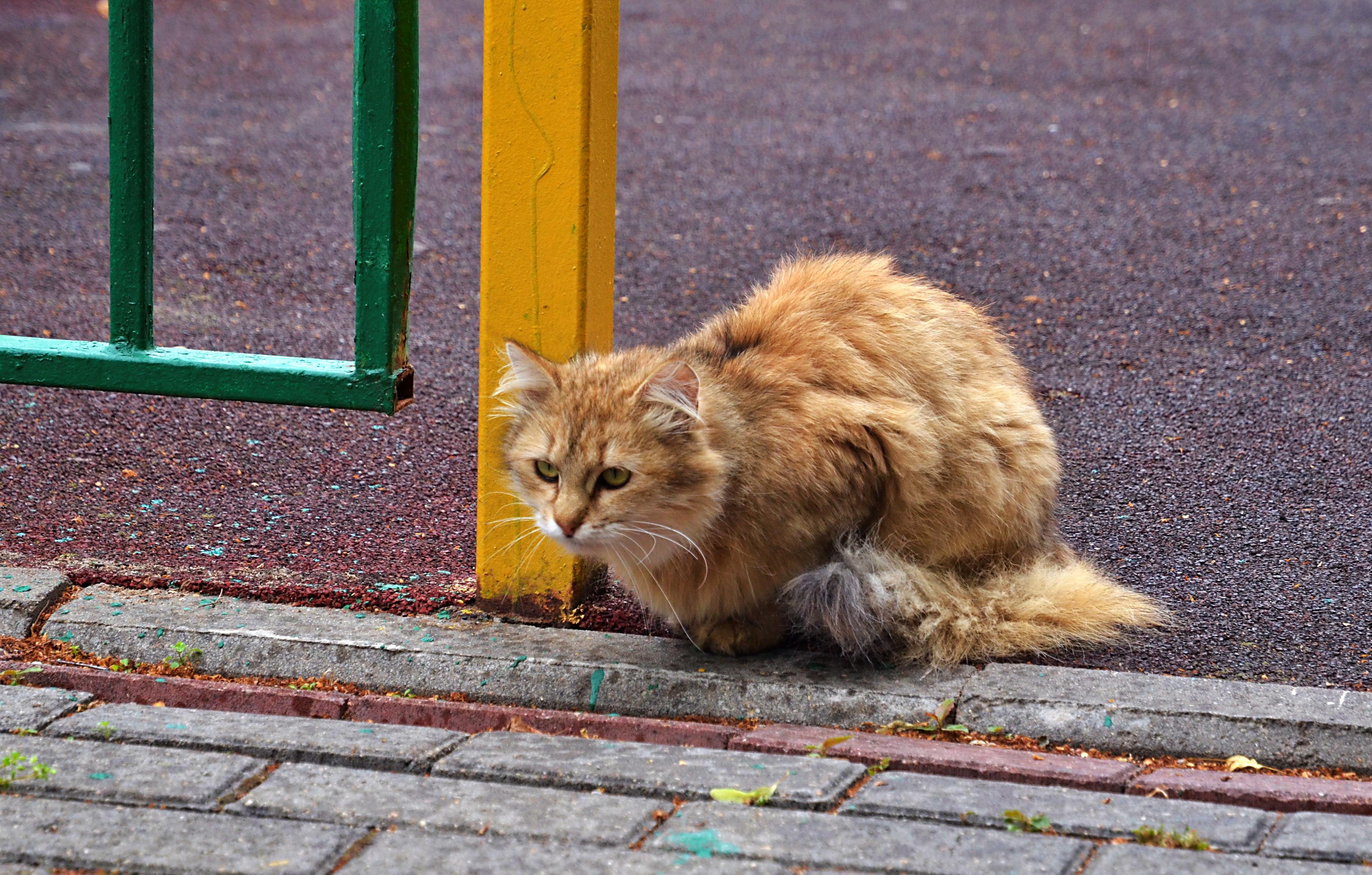 Депутат Елена Самышина: Москвичи должны помогать брошенным животным