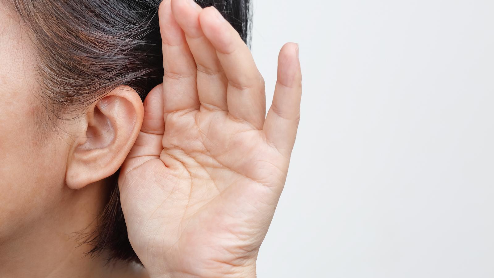 Объемную модель человеческого уха представят в Дарвиновском музее