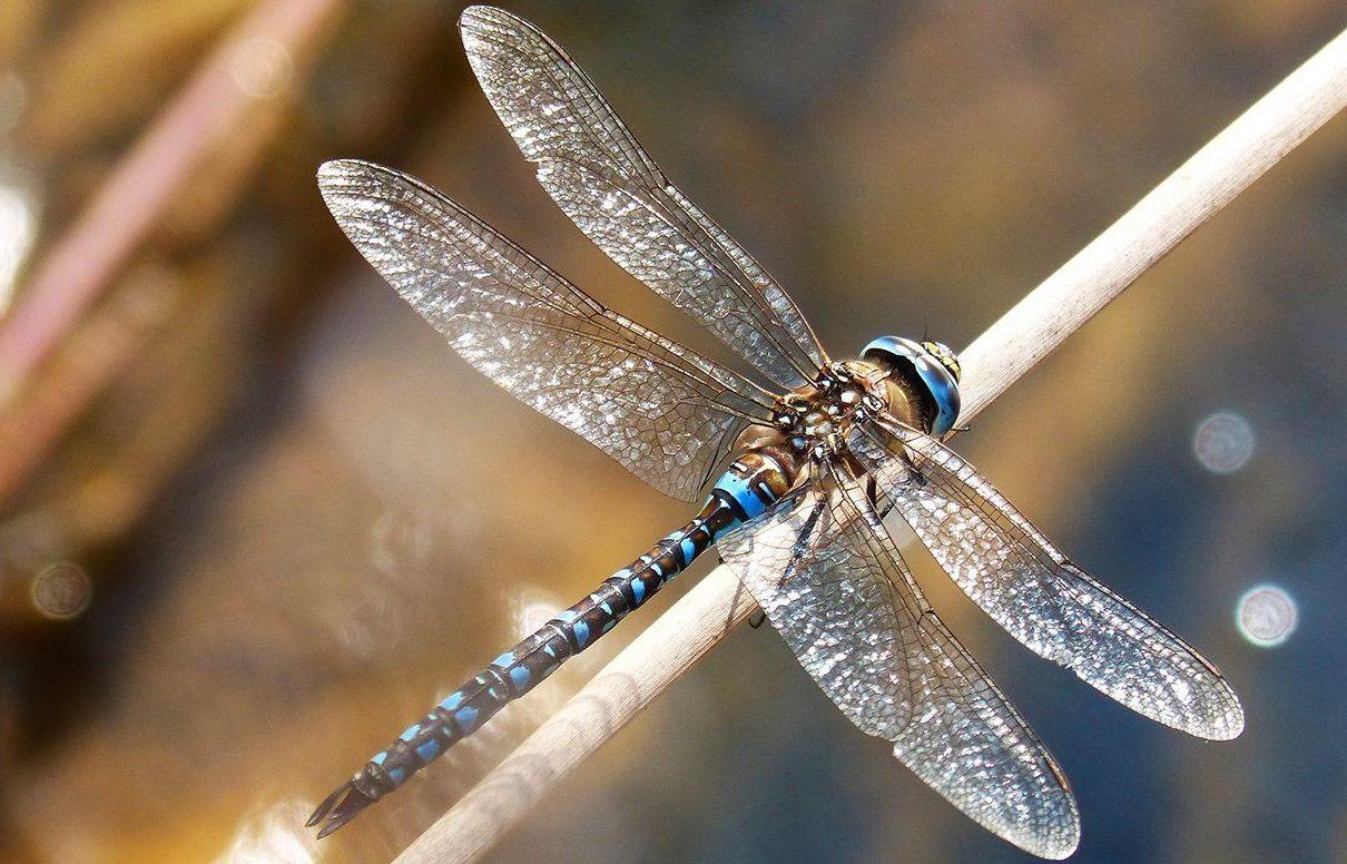 Стрелки и коромысло: горожанам рассказали о необычных насекомых на Москве-реке