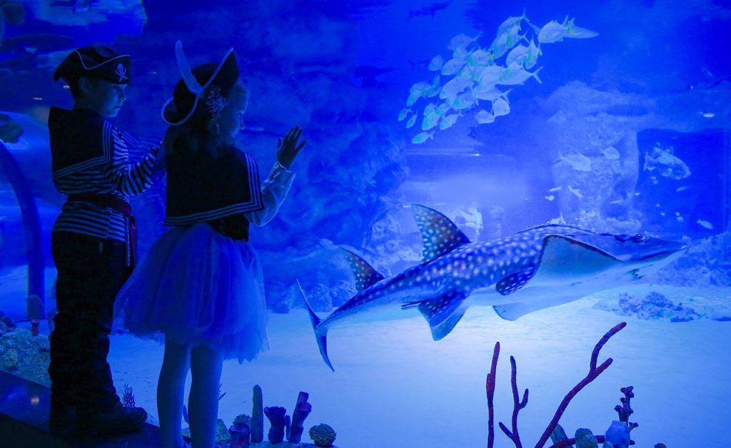Гостям Дарвинского музея покажут подводные города. Фото: сайт мэра Москвы