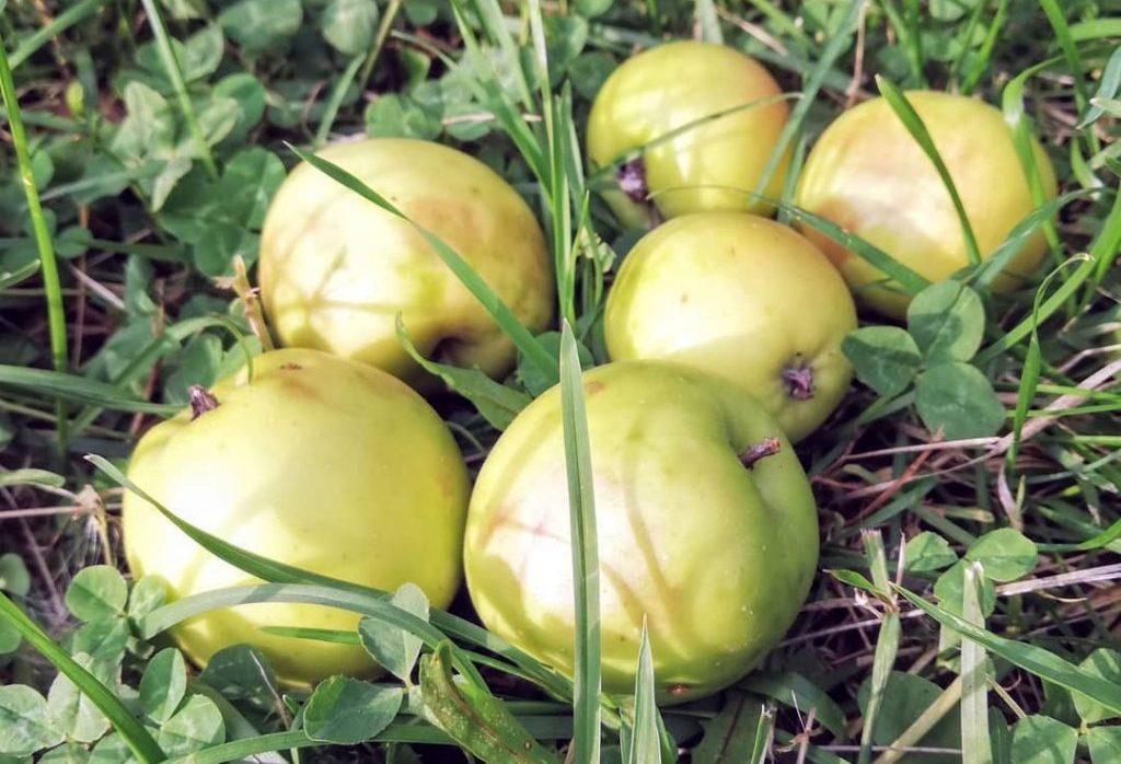 Осень со вкусом яблок