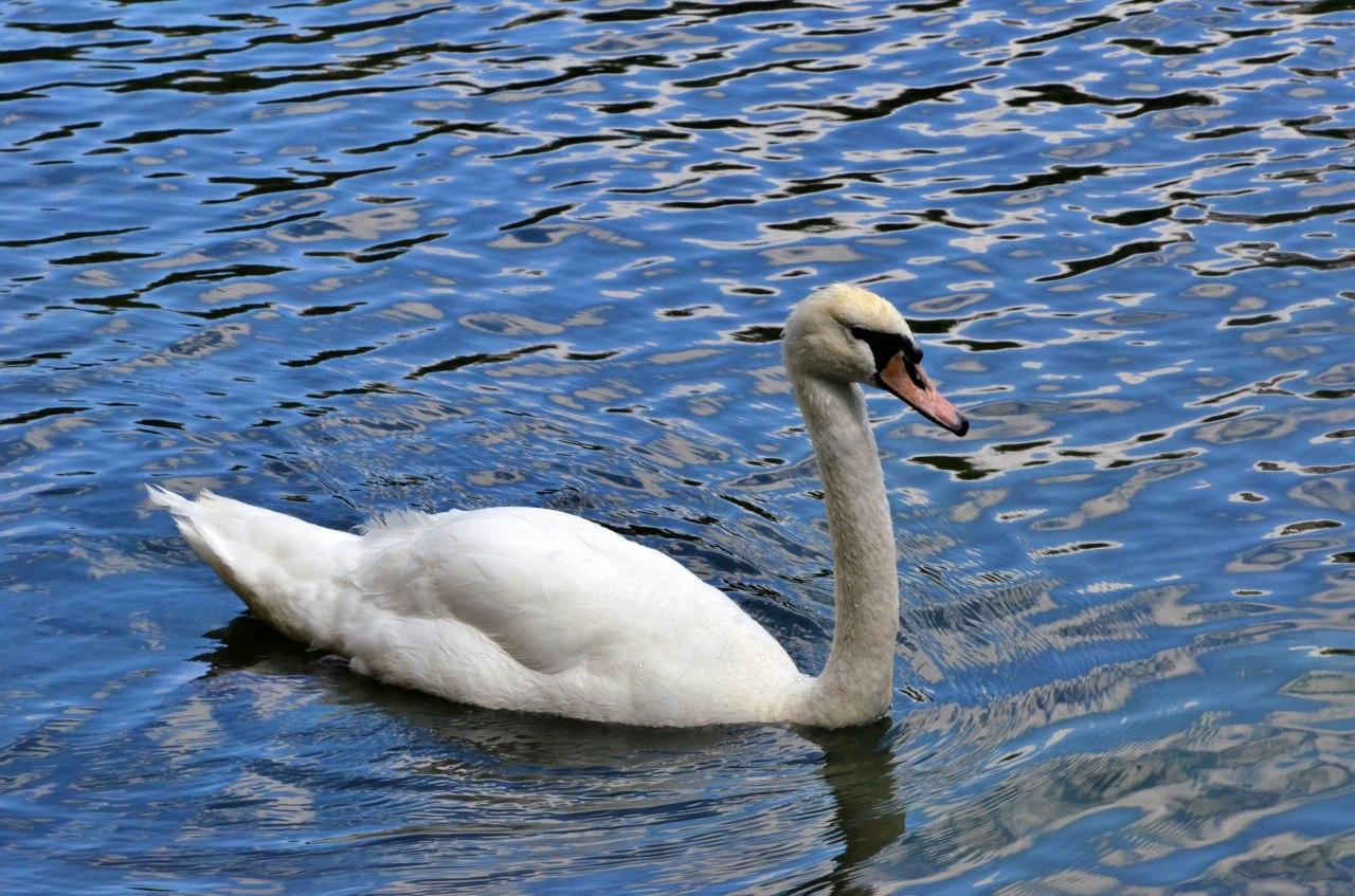Водоплавающих птиц юга отправят на зимовку