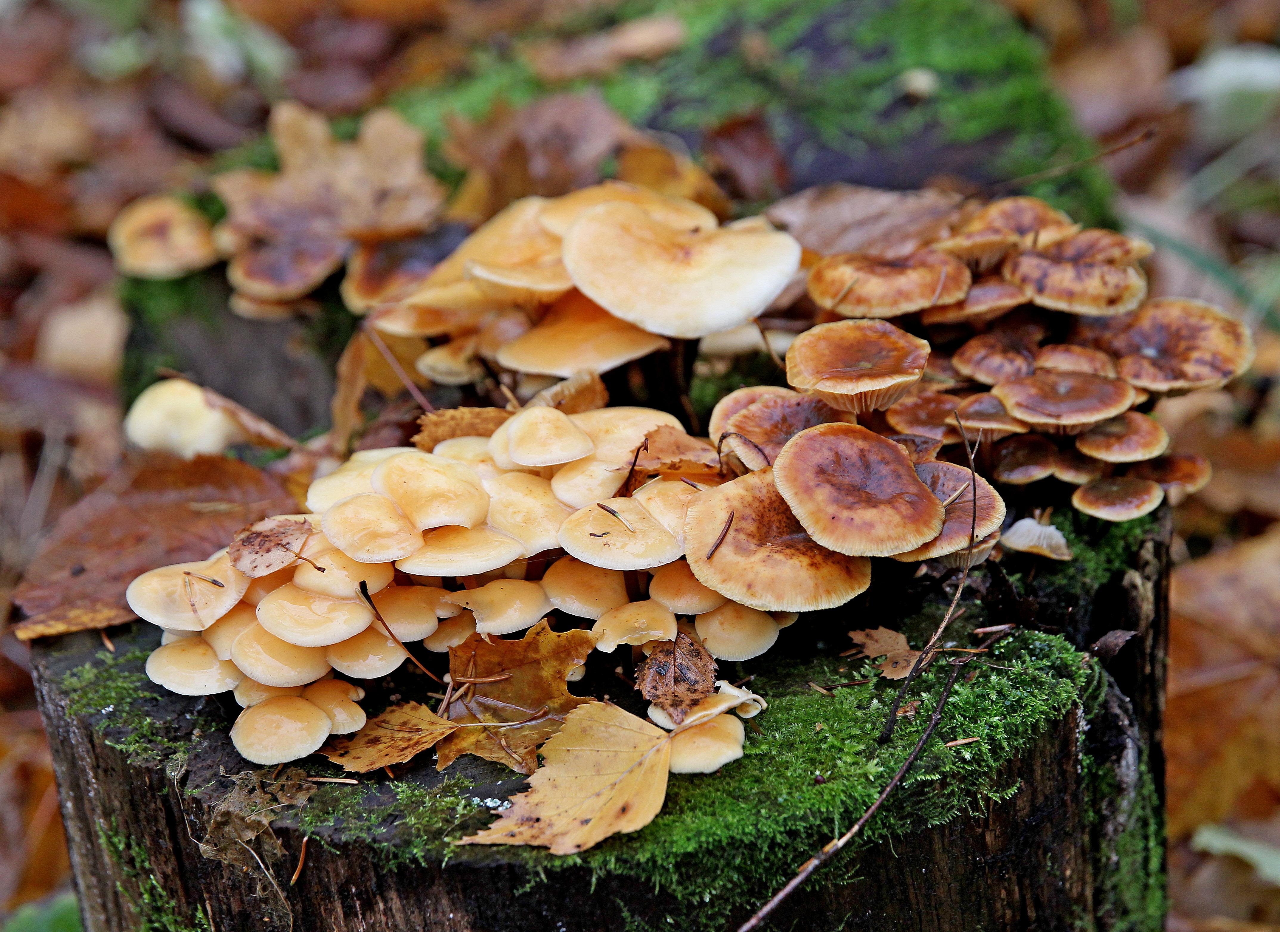 Москвичи узнают о краснокнижных грибах в «Скворечнике»
