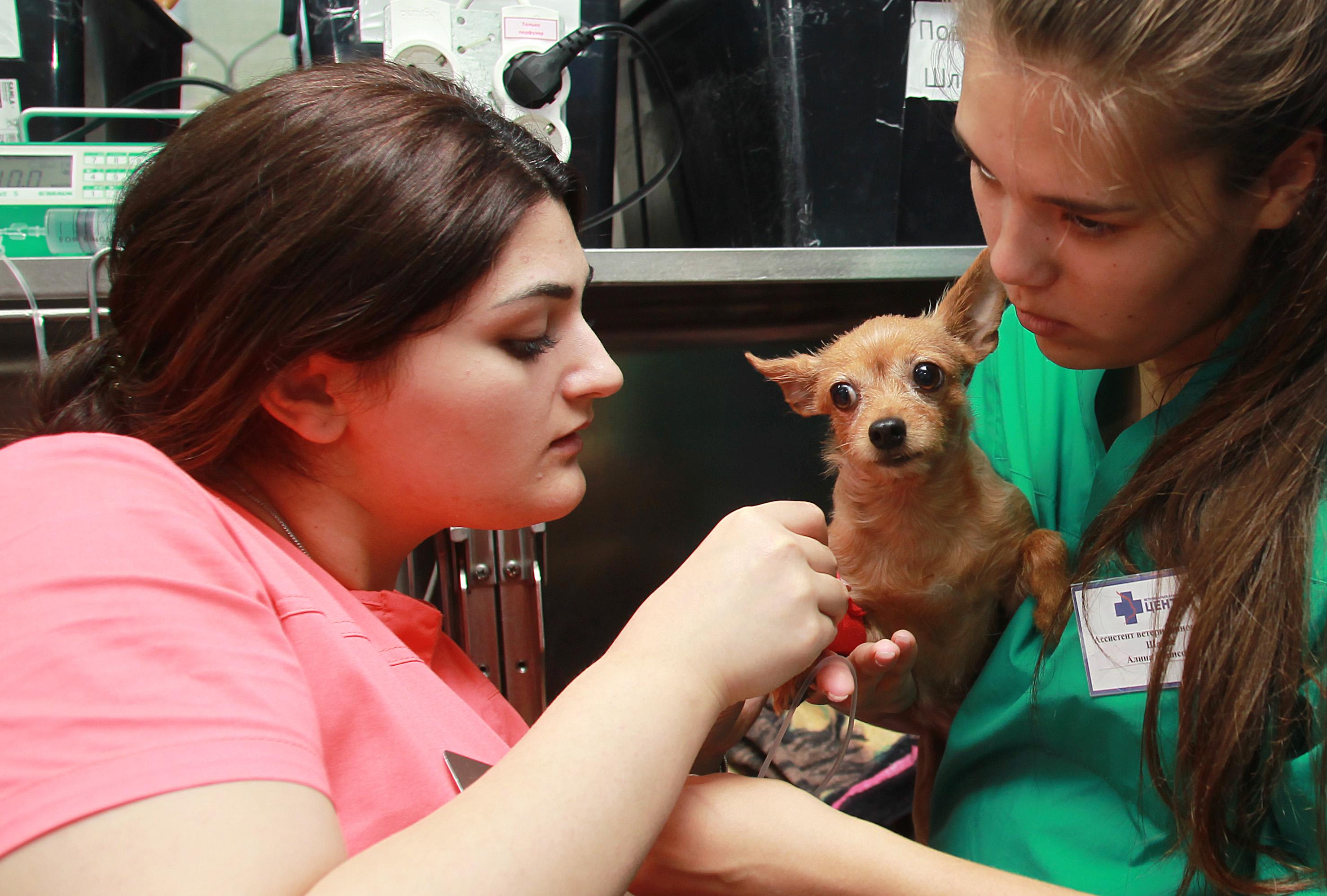Москвичи смогут сэкономить на чипировании домашних животных