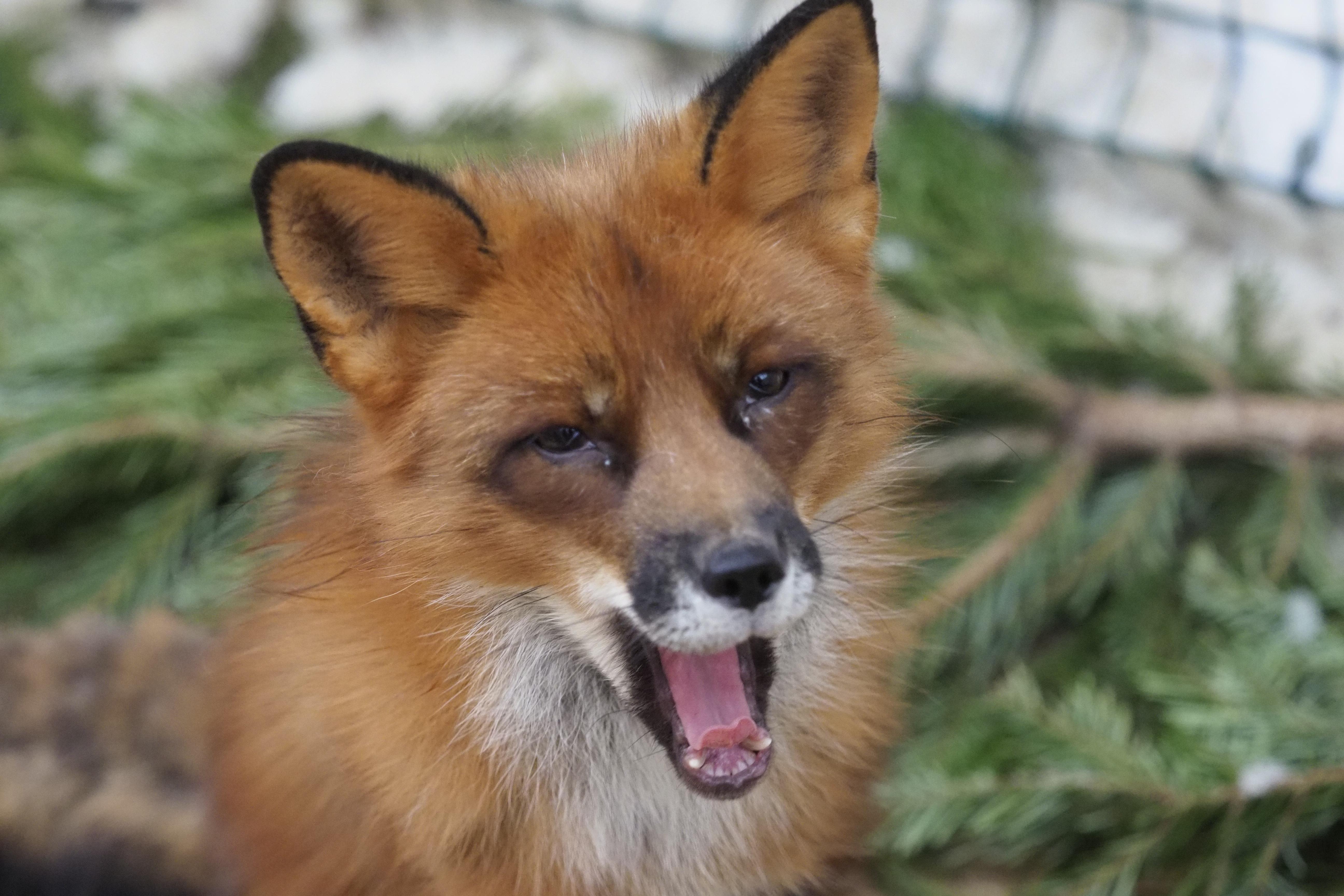 В Центр реабилитации диких животных поступило 135 особей с начала года