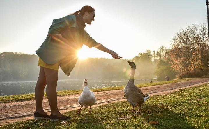 Водоплавающих птиц из парков юга отправили на зимовку