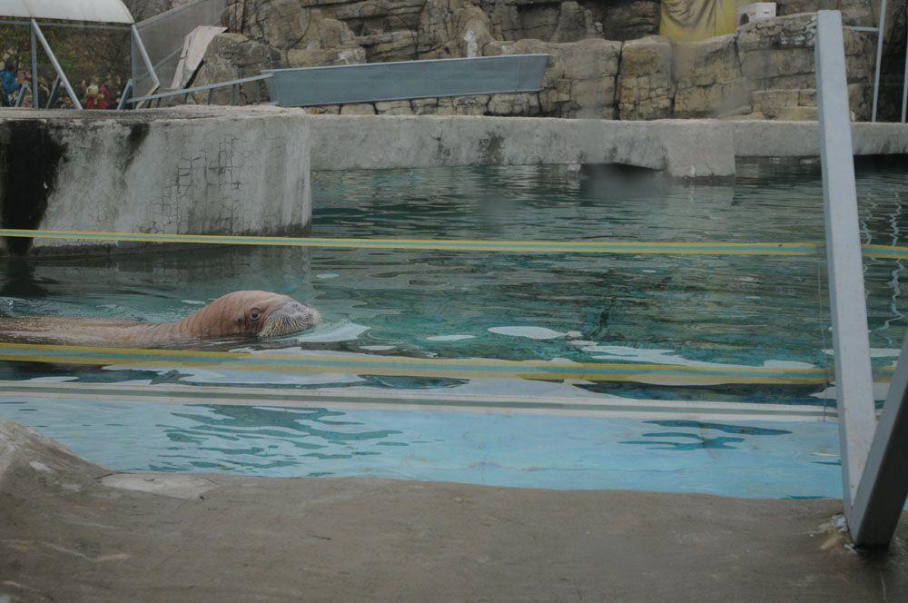Основные работы по реконструкции павильона «Ластоногие» стартовали в Московском зоопарке