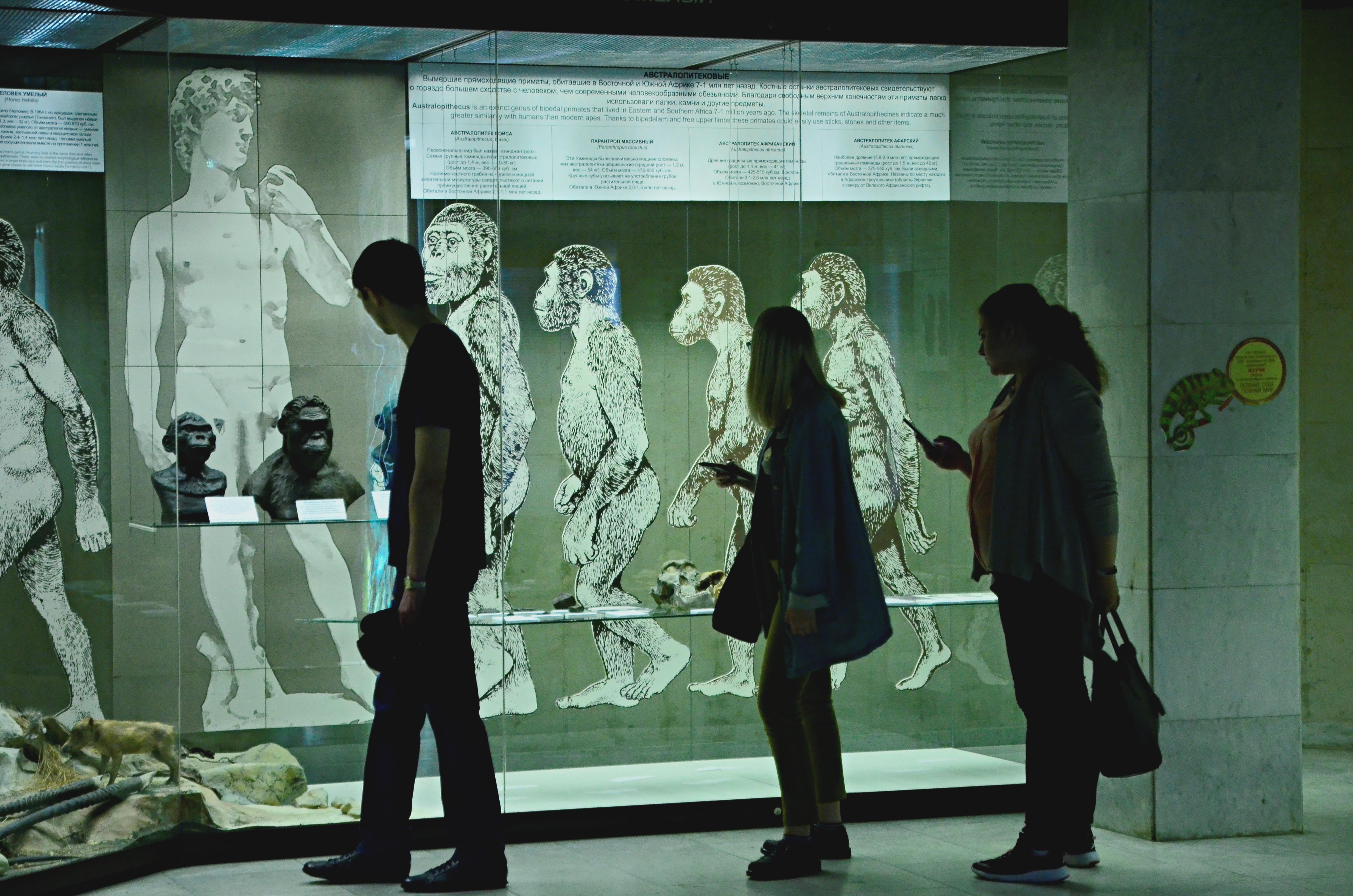 Тайны антропологии расскажут в Дарвиновском музее
