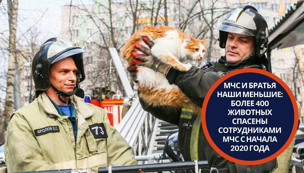 МЧС и братья наши меньшие: более 400 животных спасены сотрудниками МЧС с начала 2020 года